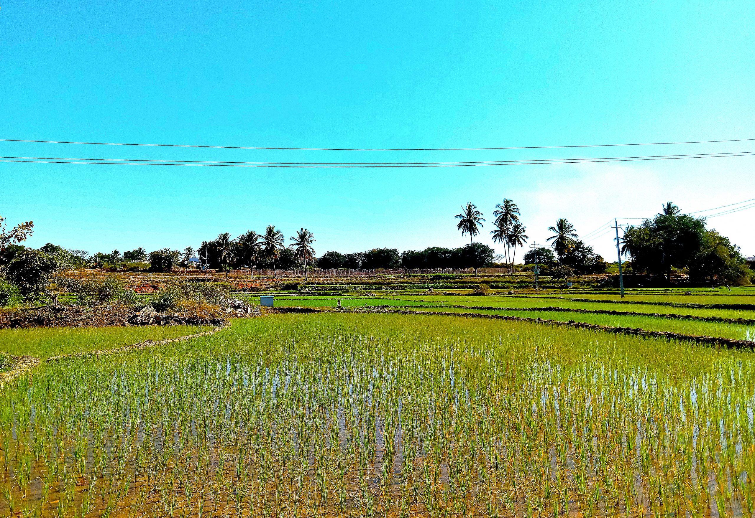Water in the crop in farm