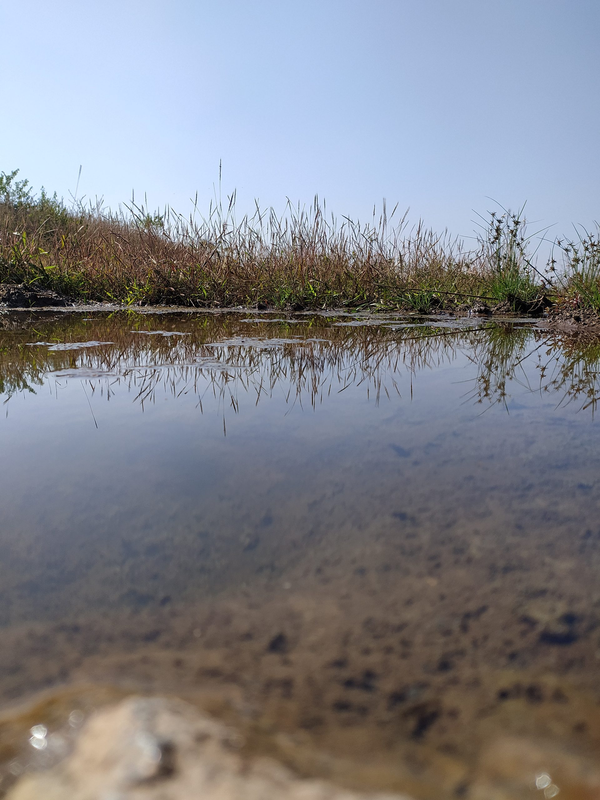 Water pond in farm