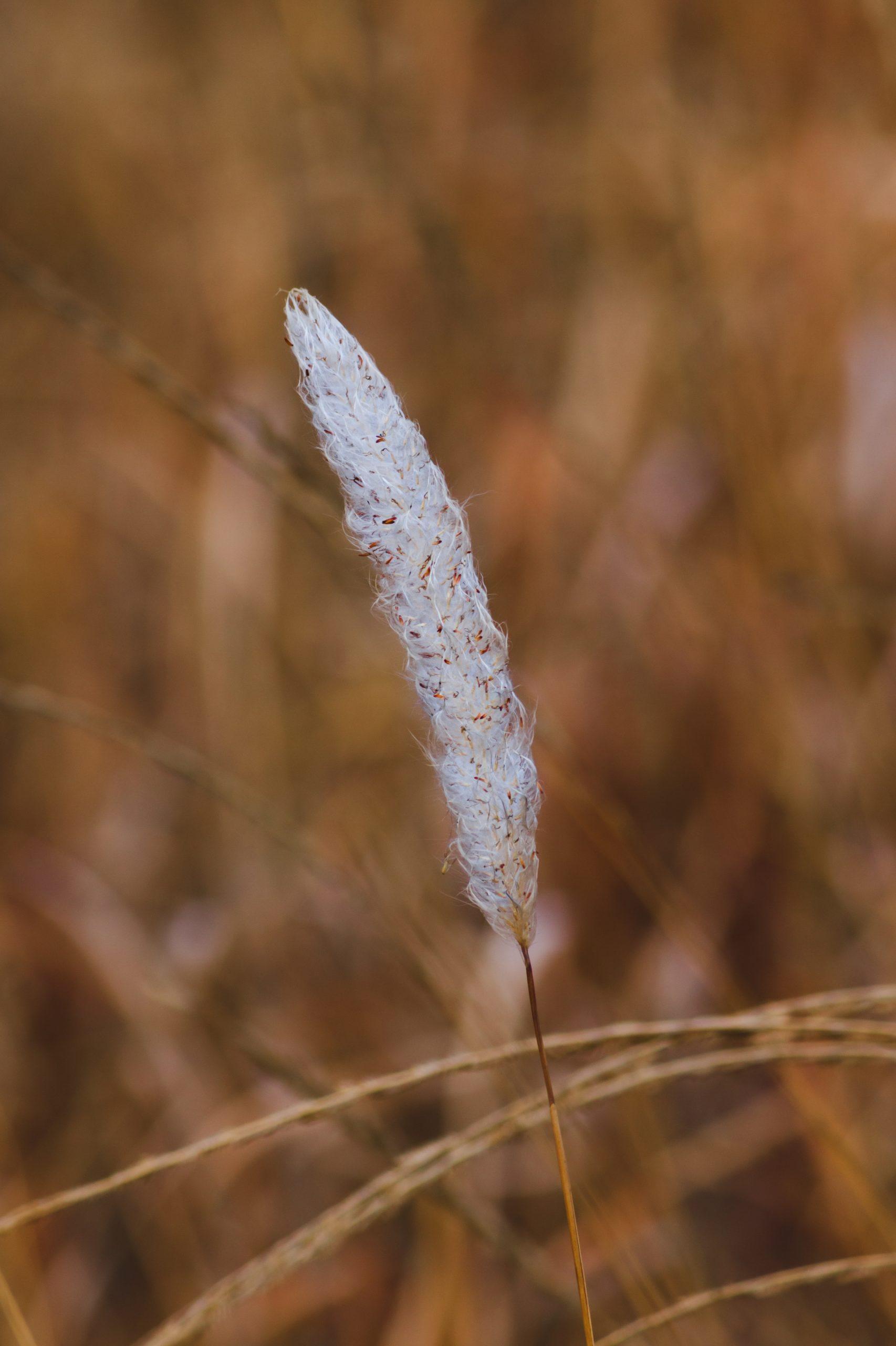 White Feather straw