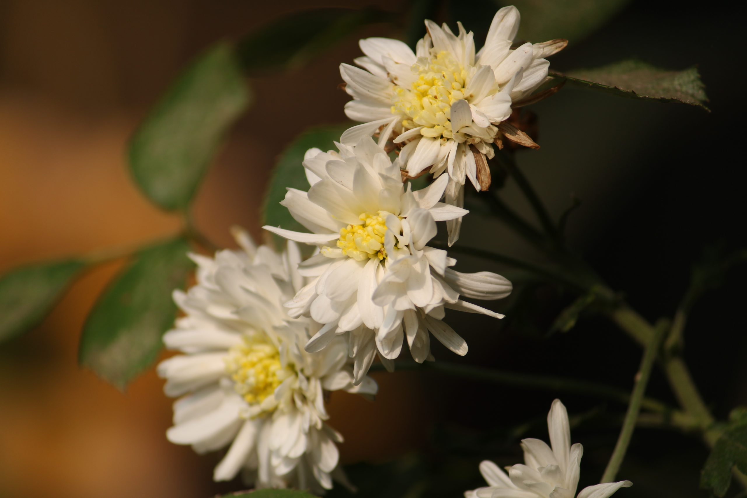 White flowers in a garden