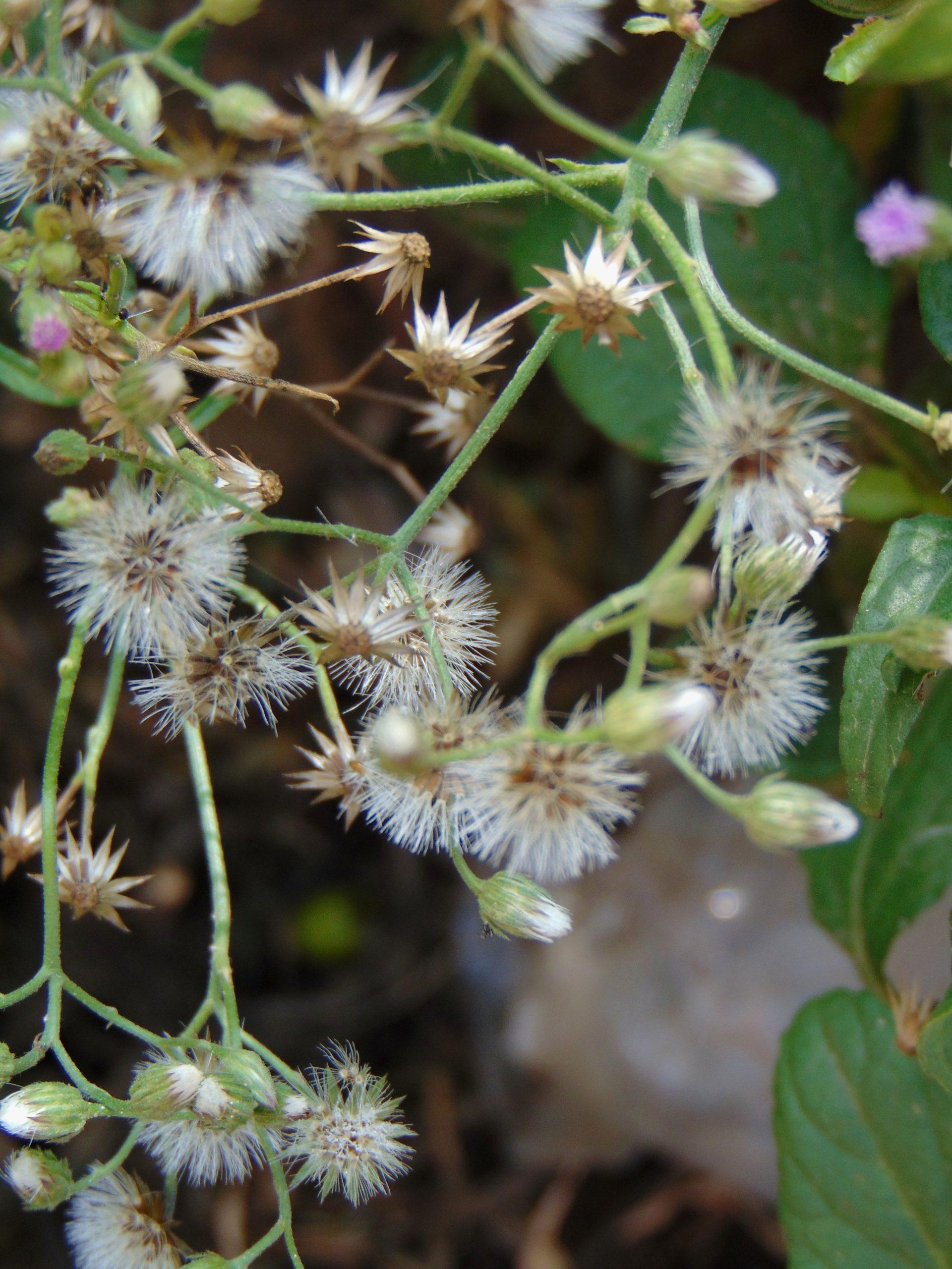 Wildflowers on plant