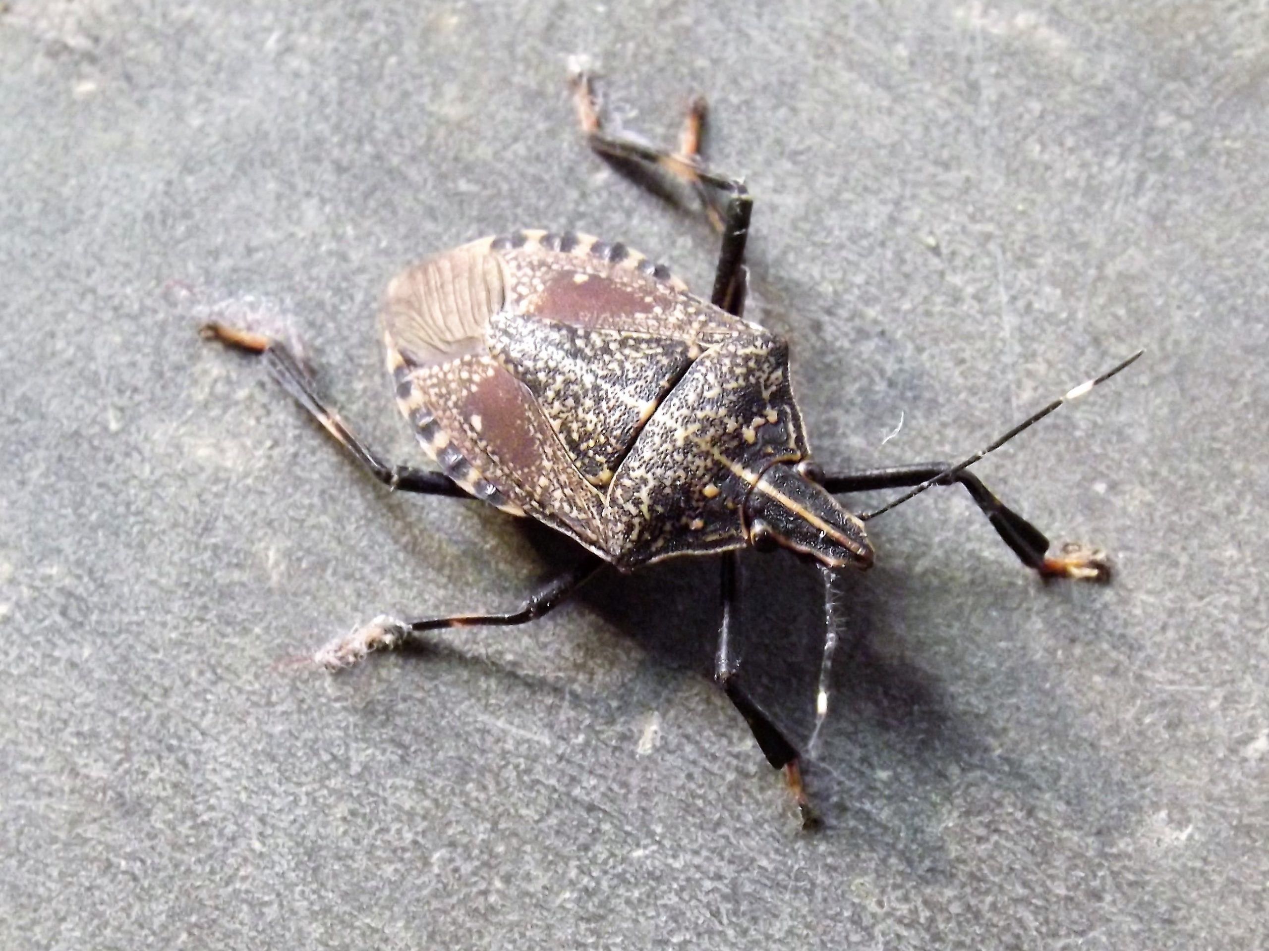 Brown insect sitting on the ground