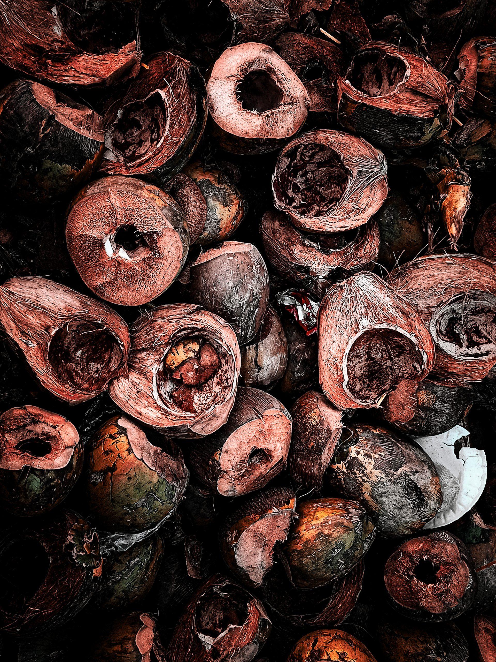 Waste coconut shells