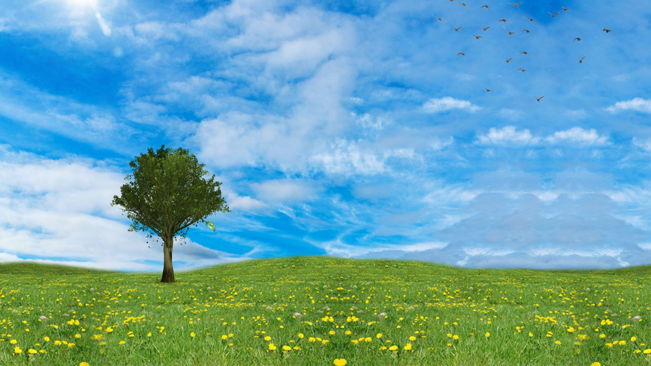 grass-field-tree-blue-sky-background