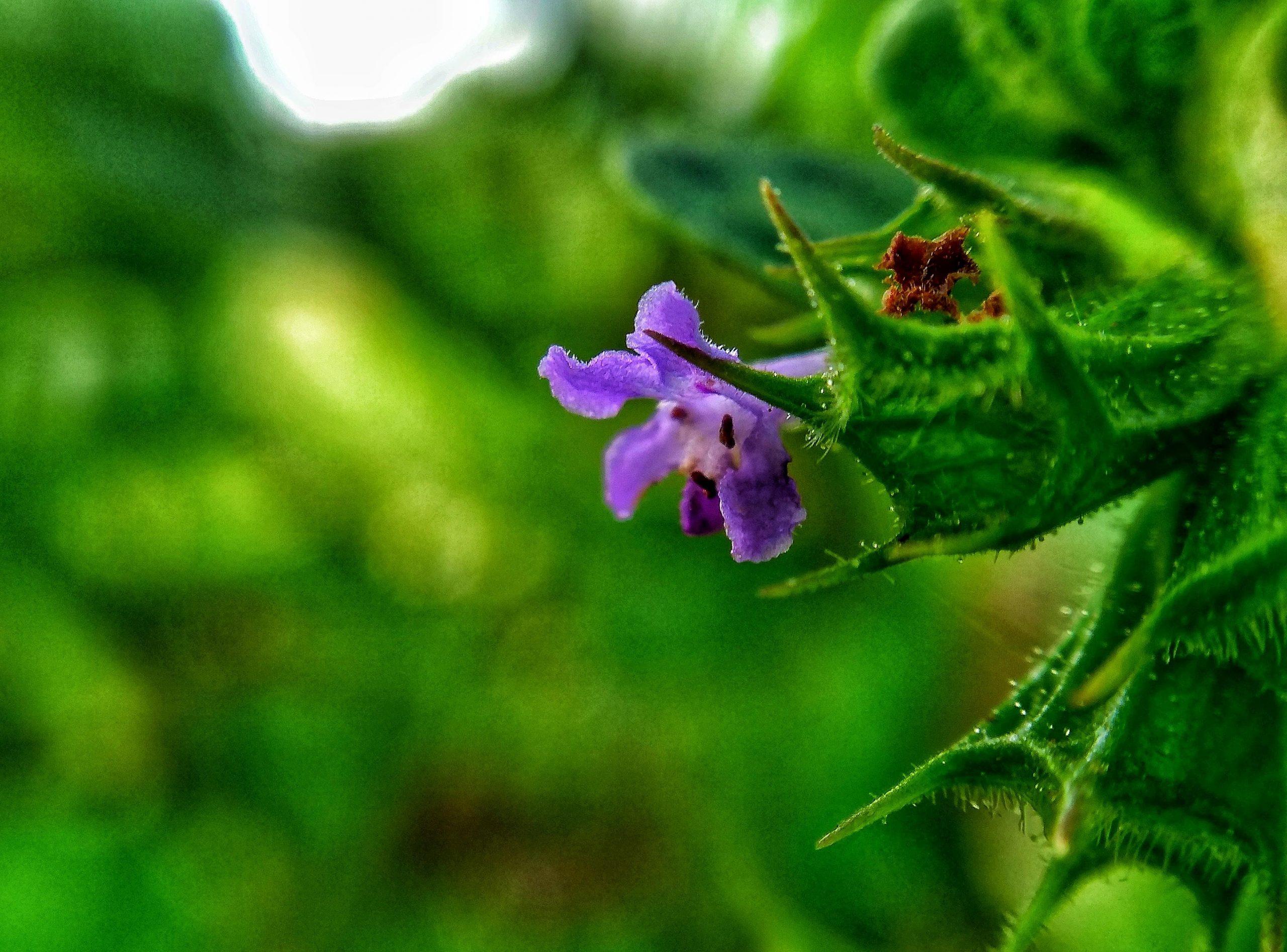 purple flower on plant