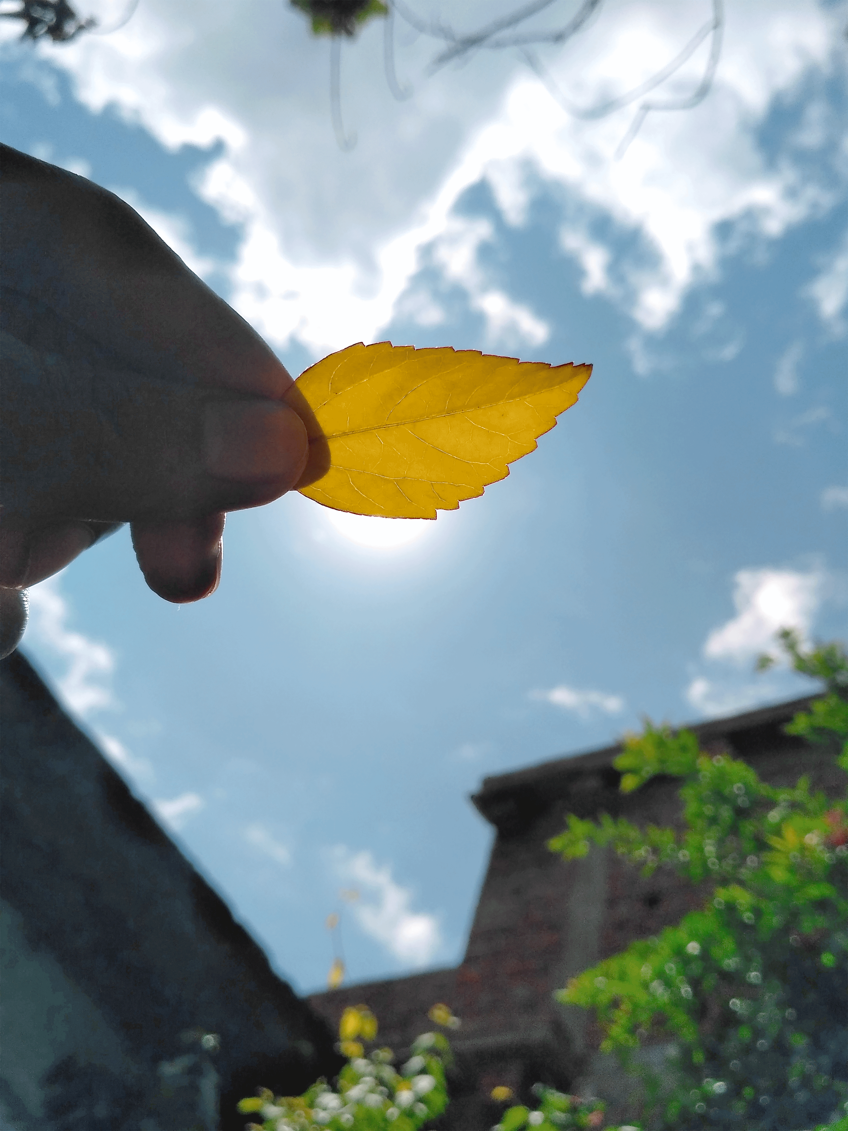A leaf in hand