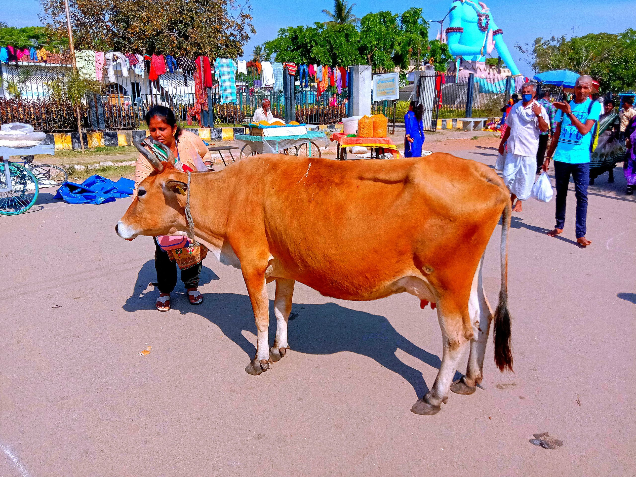 A cow at a market place