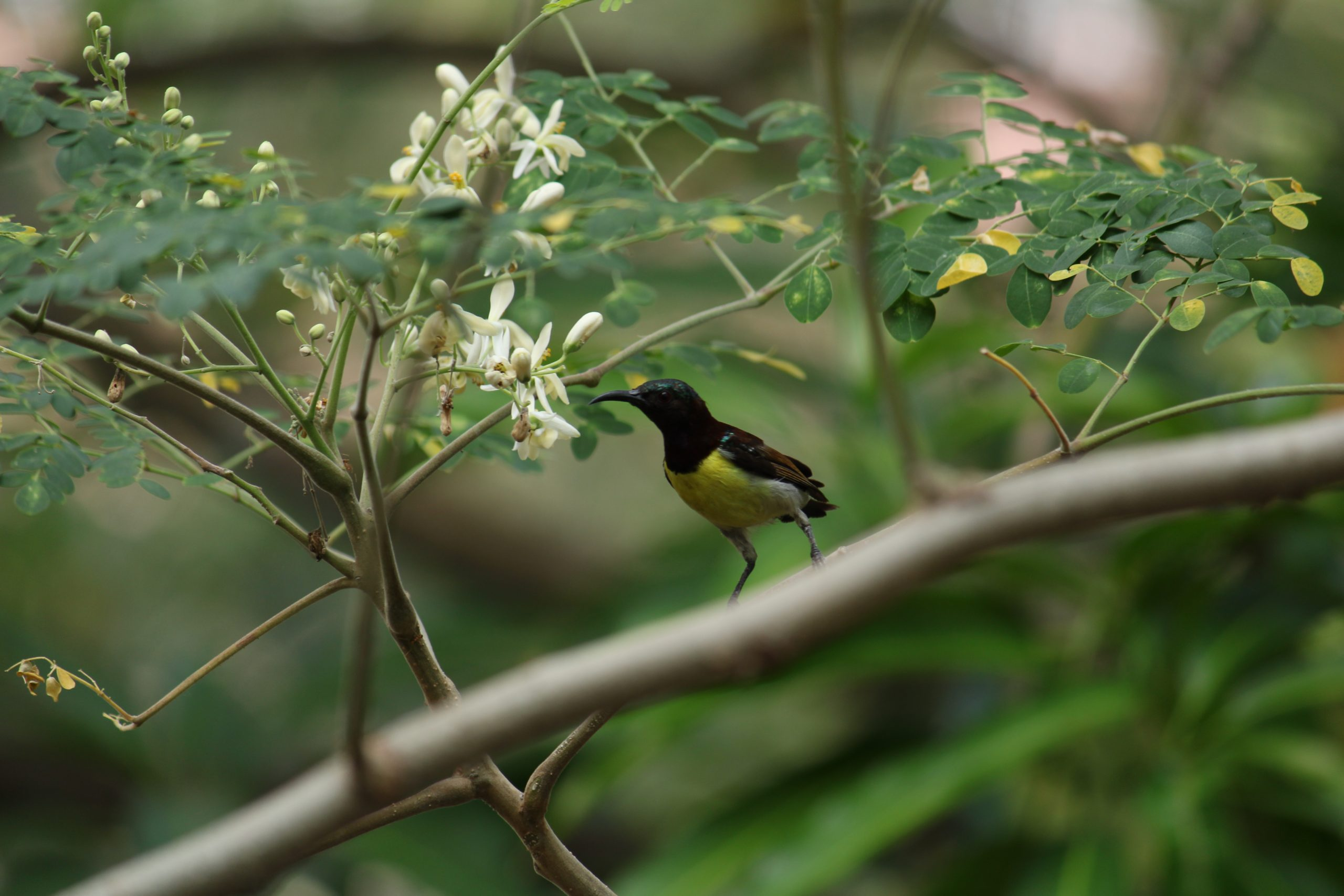 A bird sitting on a tree.