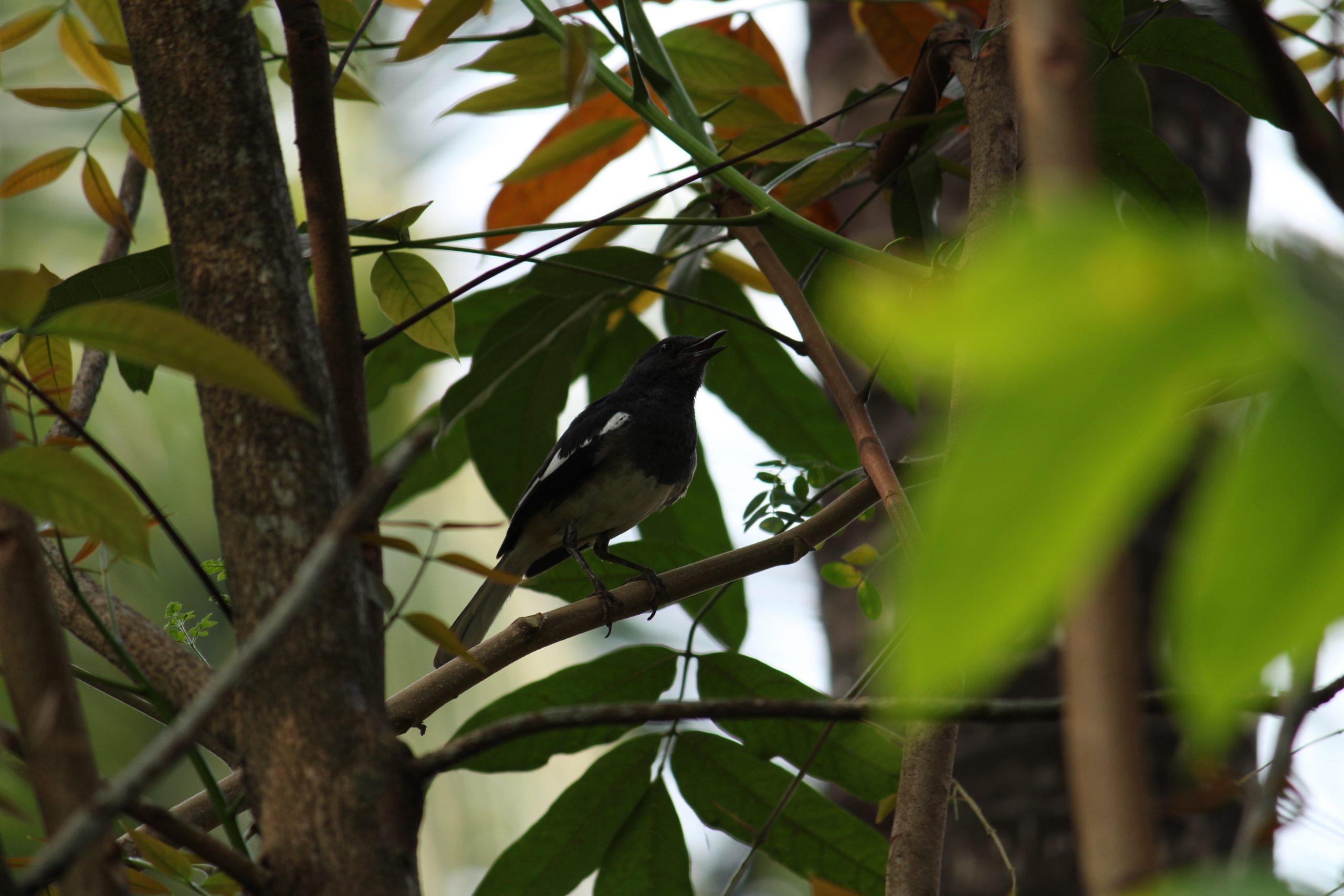 Black bird sitting on a branch