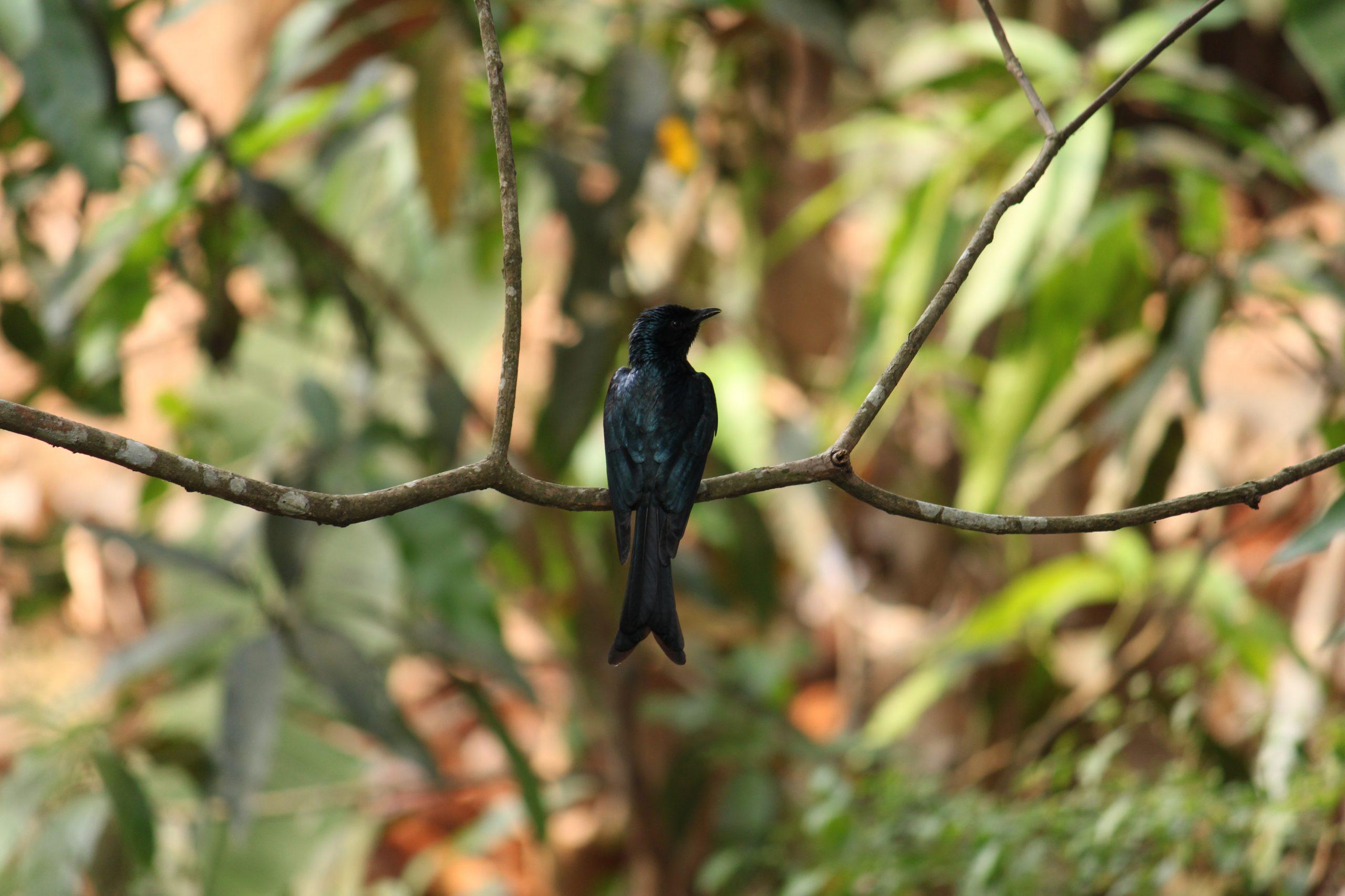 A bird sitting on a tree branch