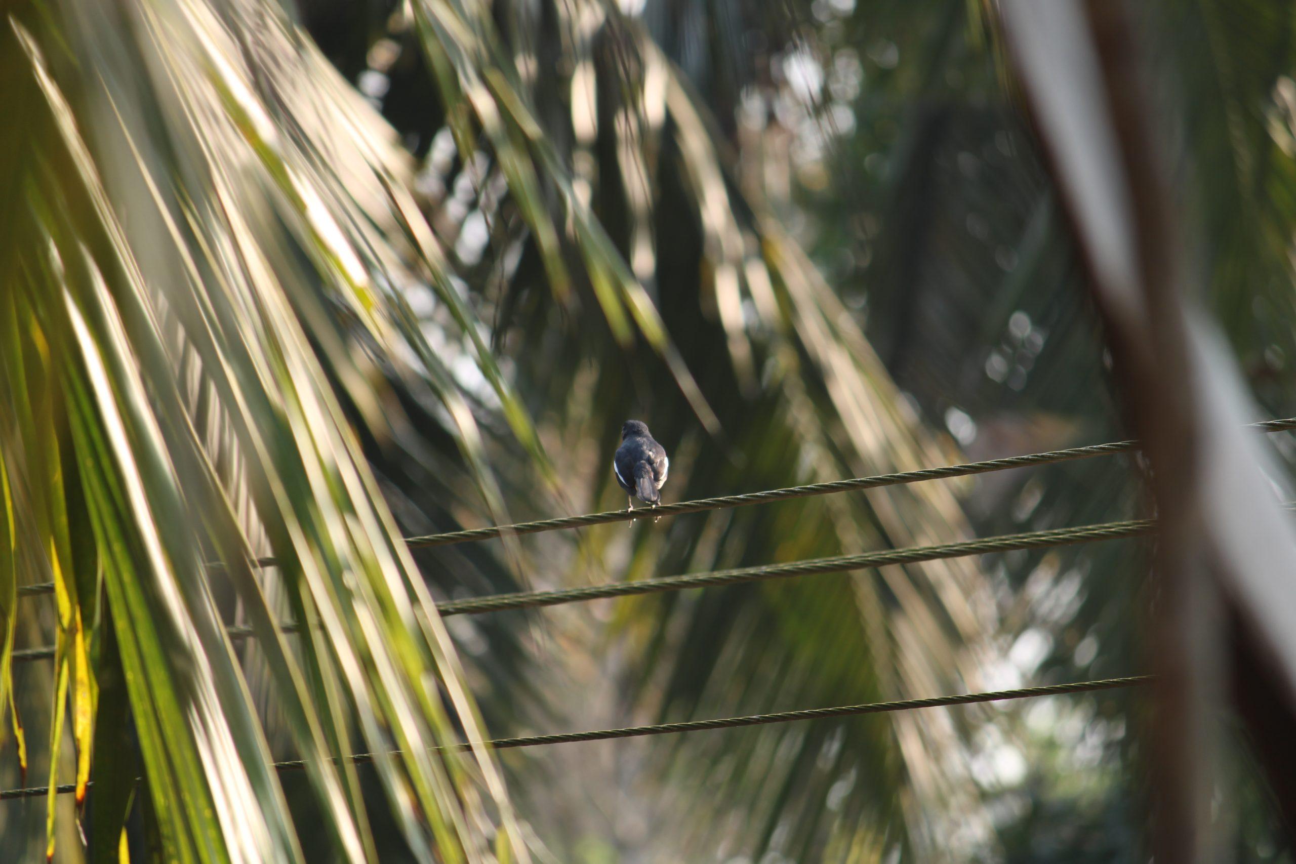 Bird sitting on wire