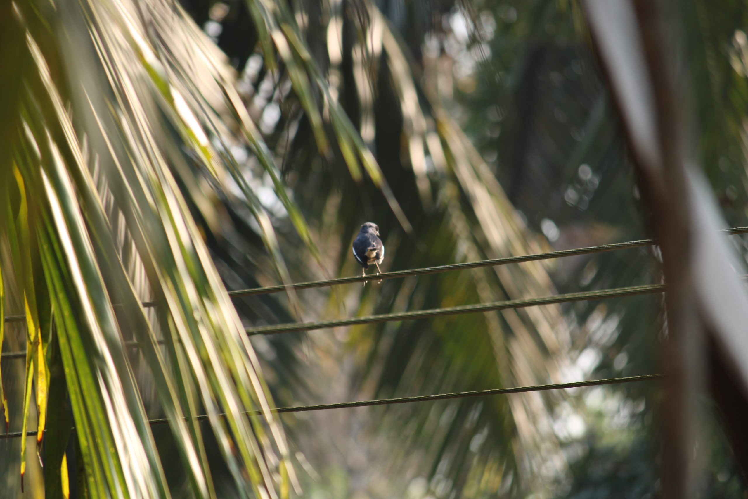 A bird sitting on an electric wire