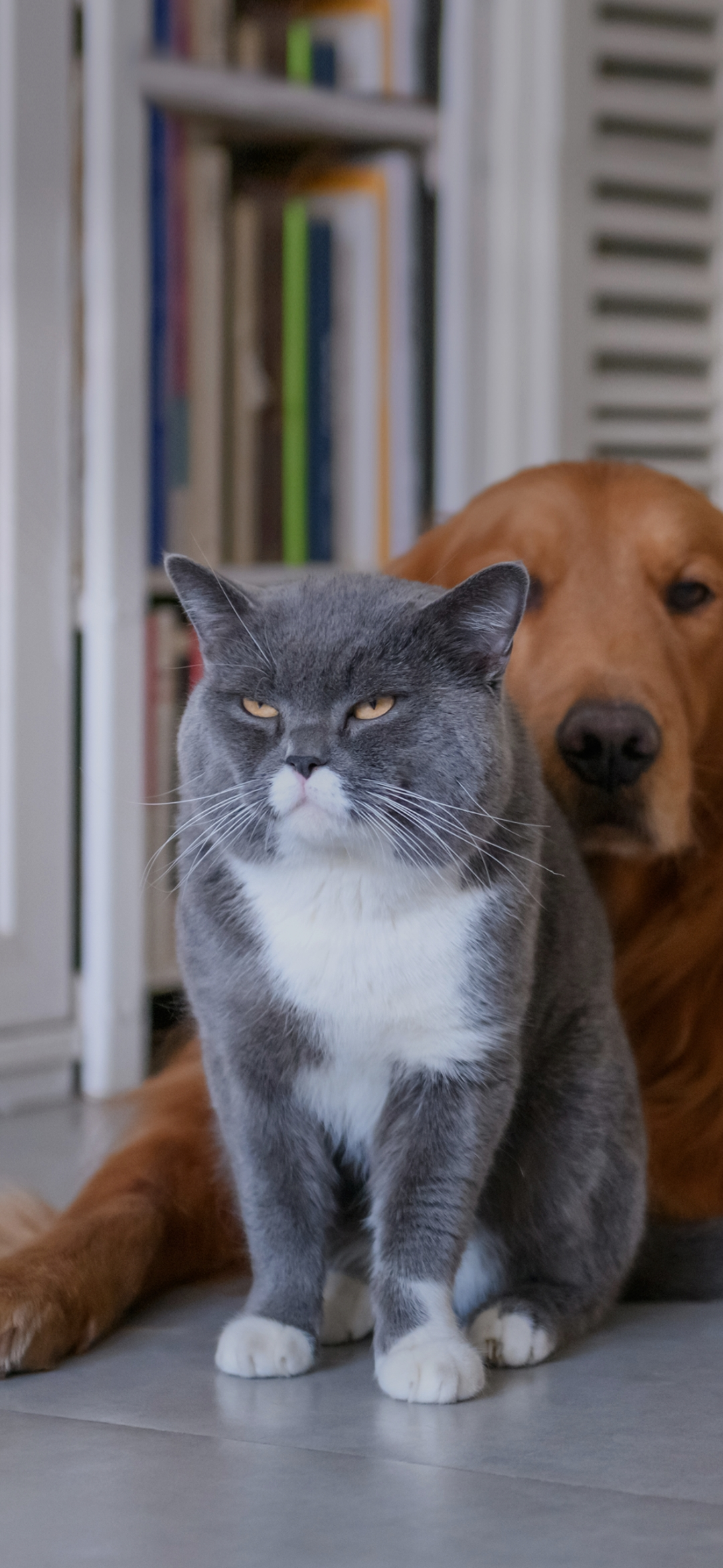 A cat and dog