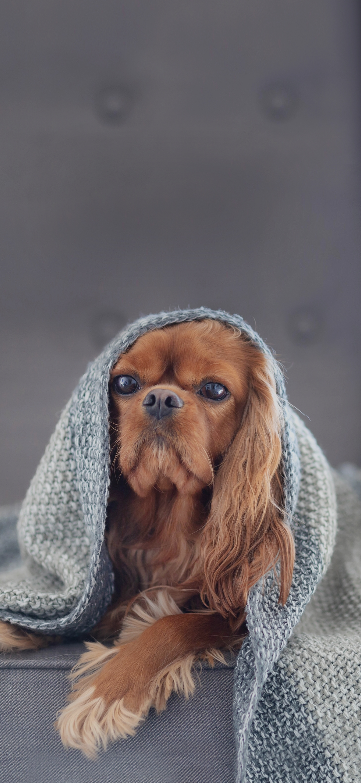 A cloth on a dog's head