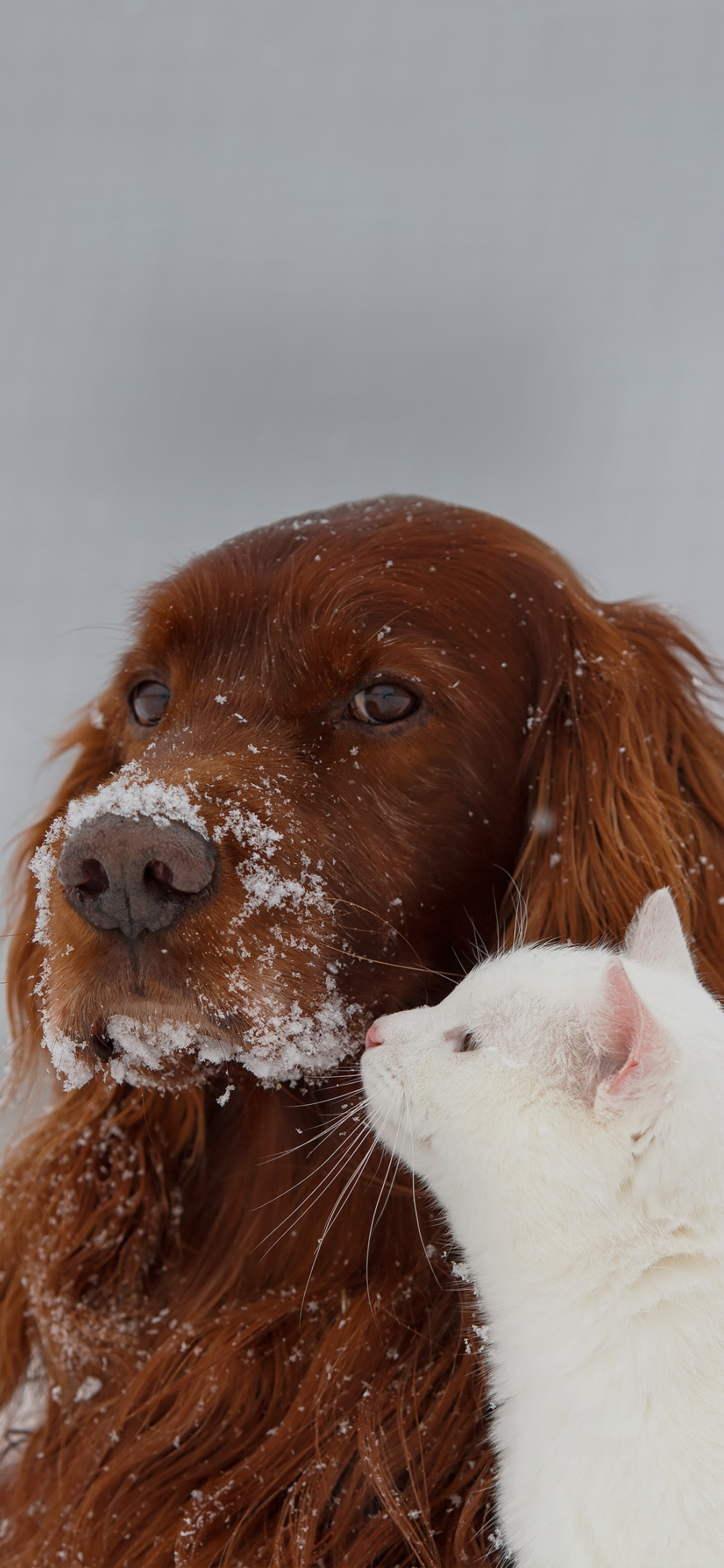 Dog and cat in snow