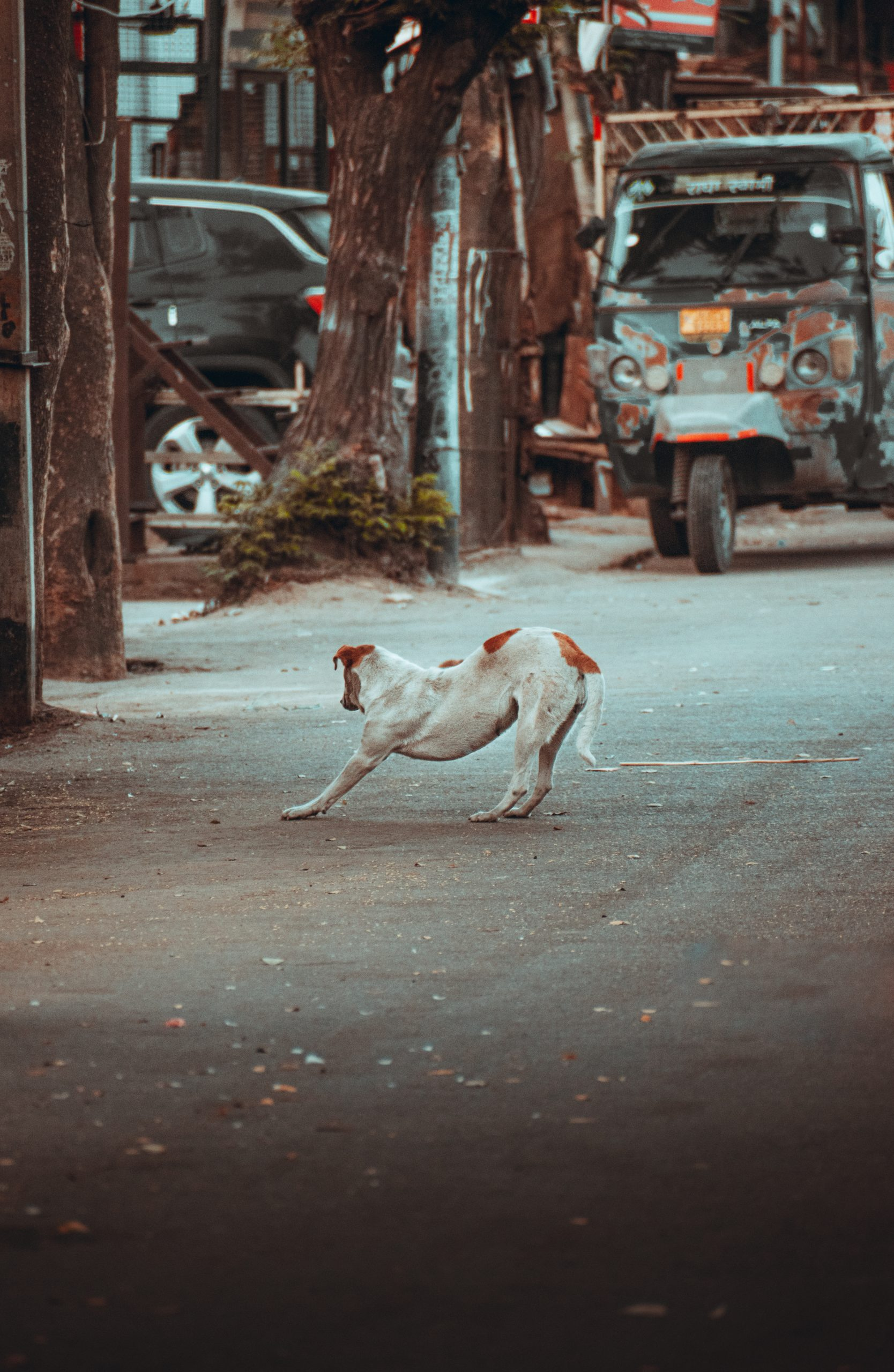 A dog on a road