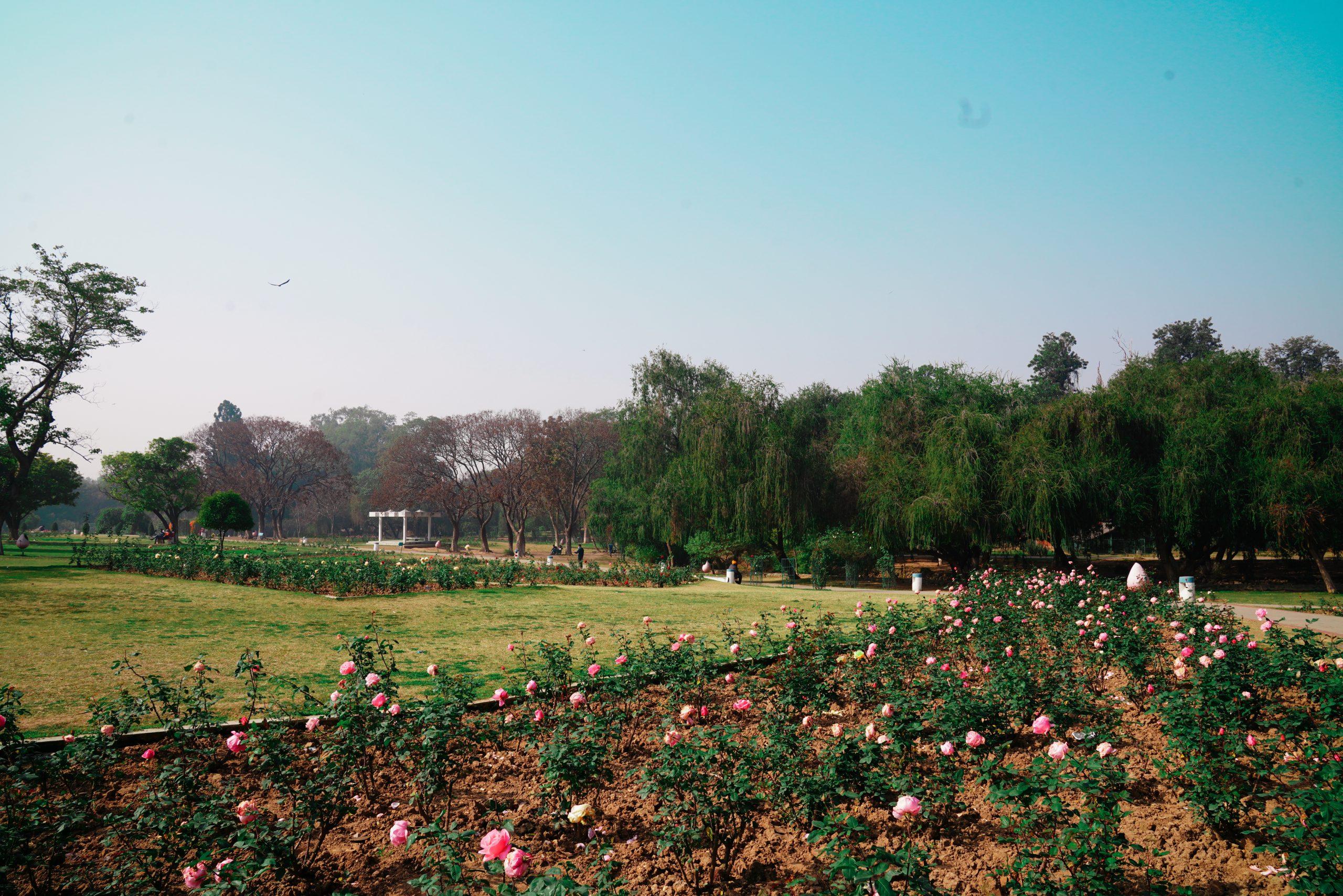 A garden in Chandigarh city