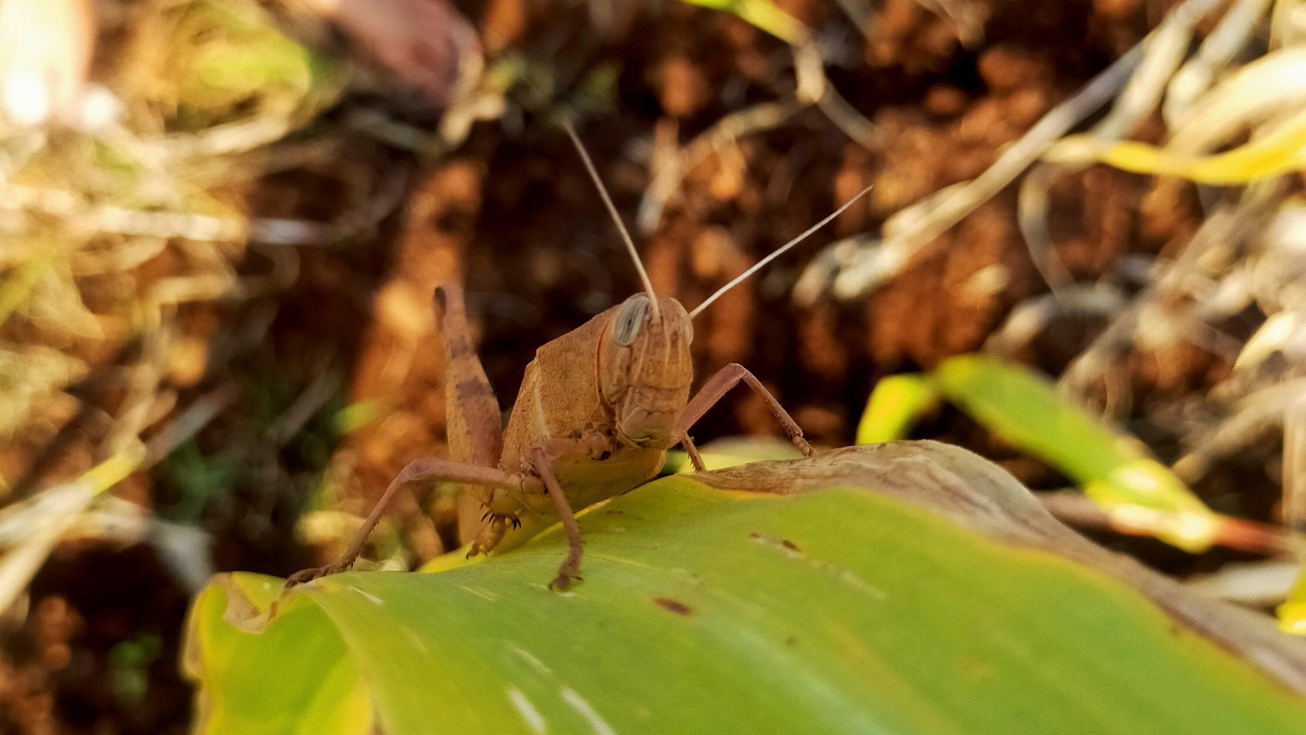 A grasshopper sitting on leaf