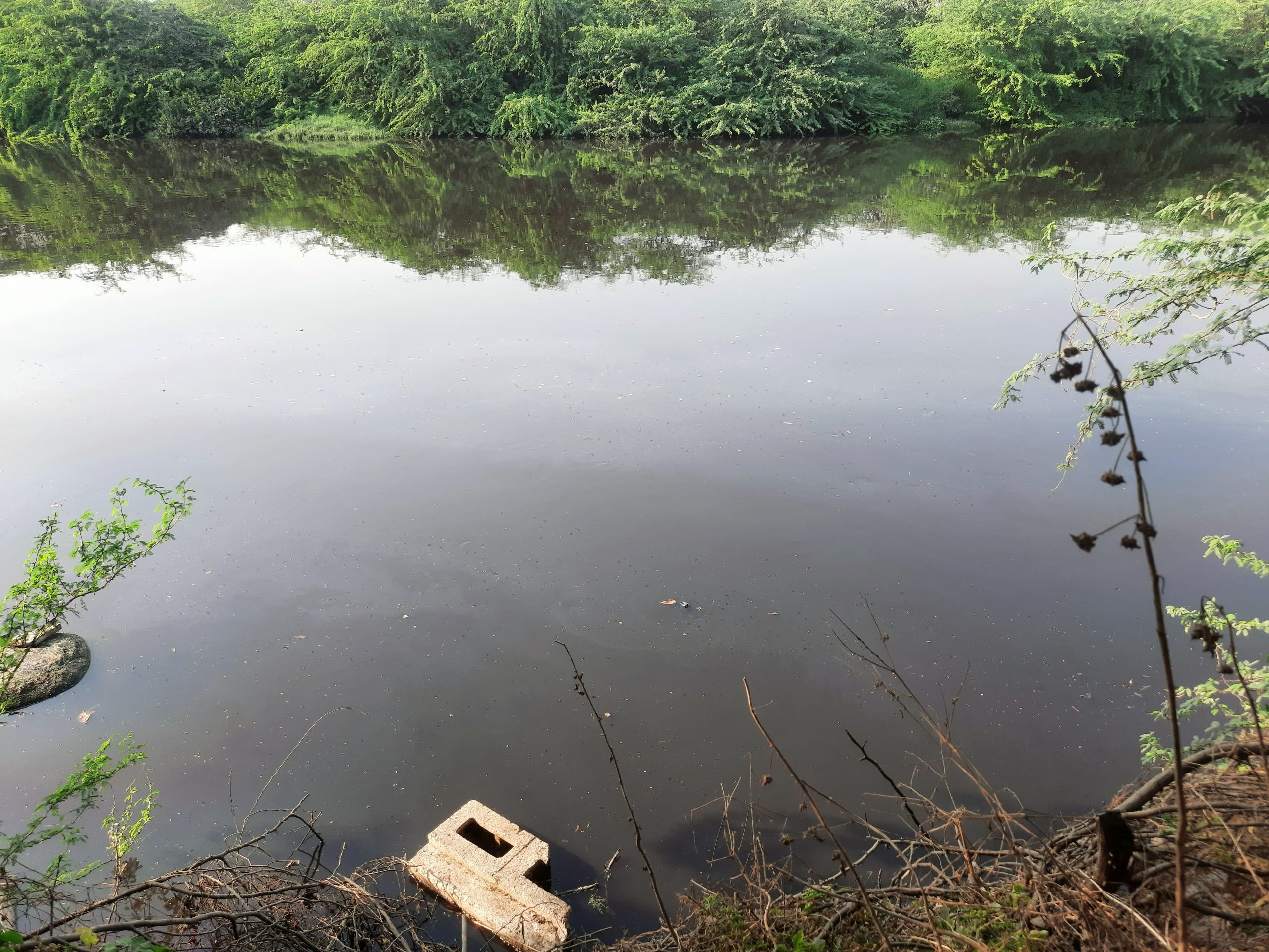 Polluted lake in the forest