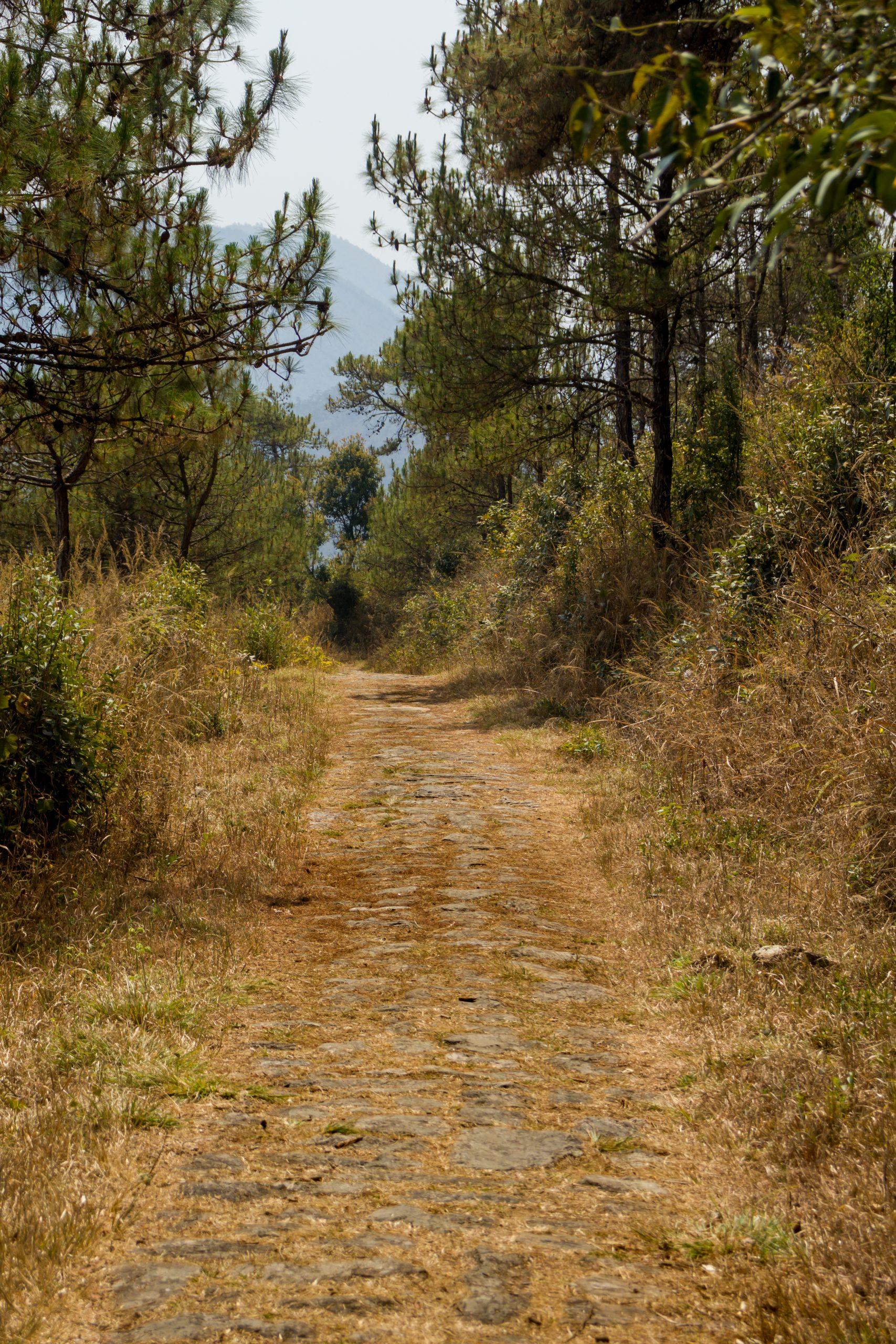 A path in a jungle
