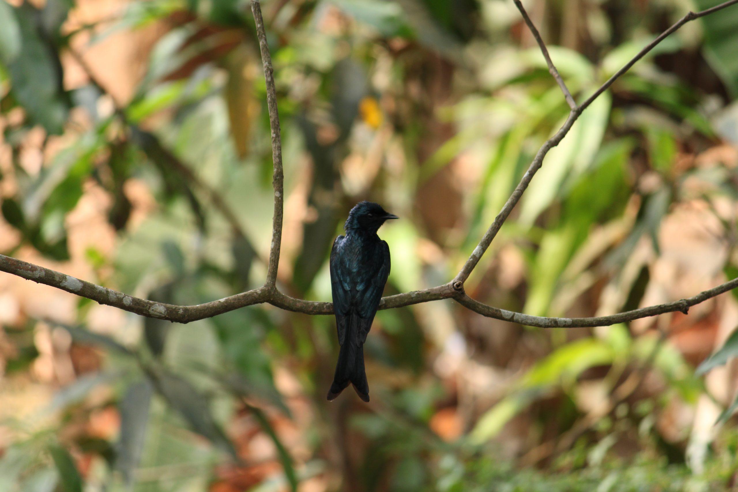A perching bird