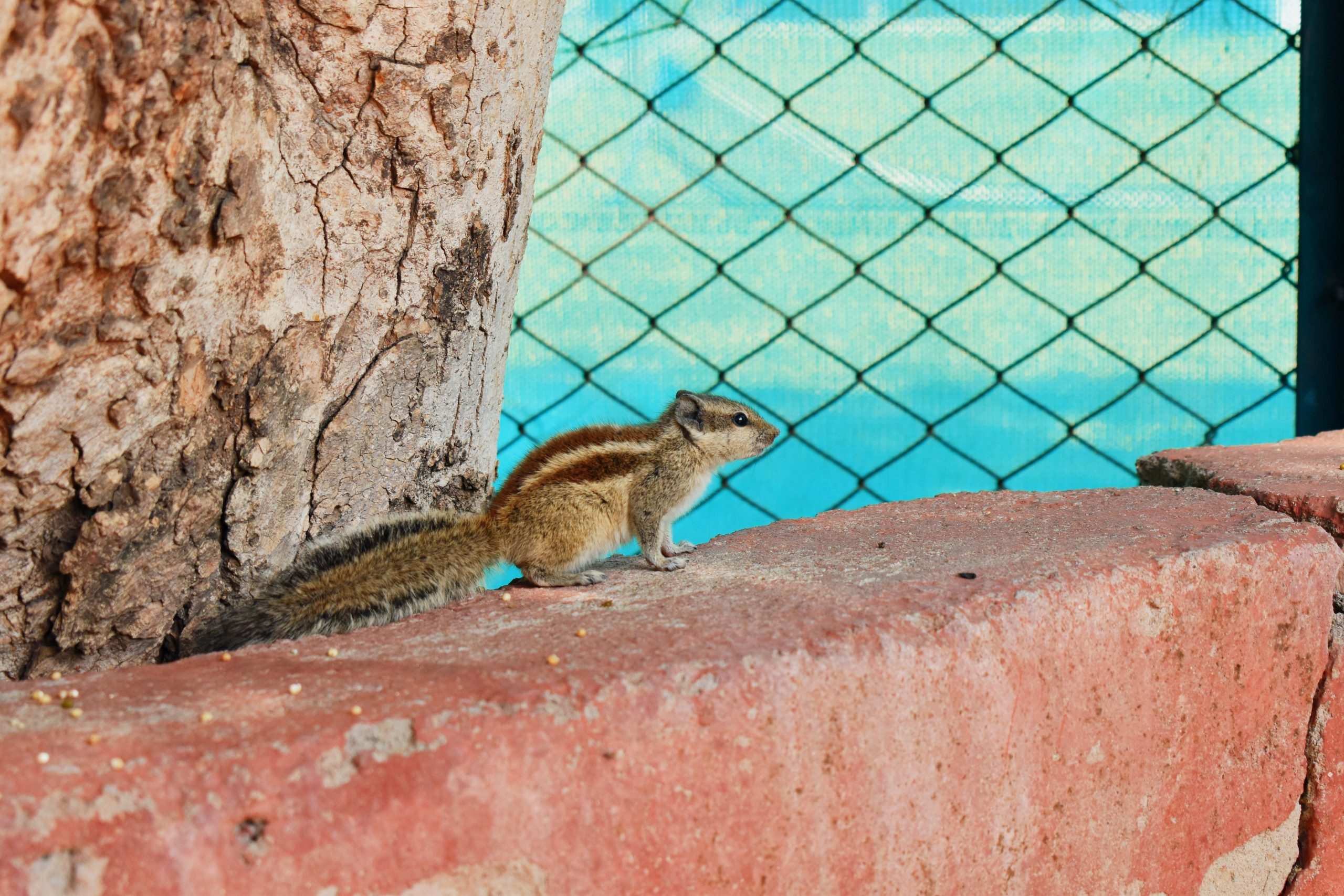 A squirrel on a wall