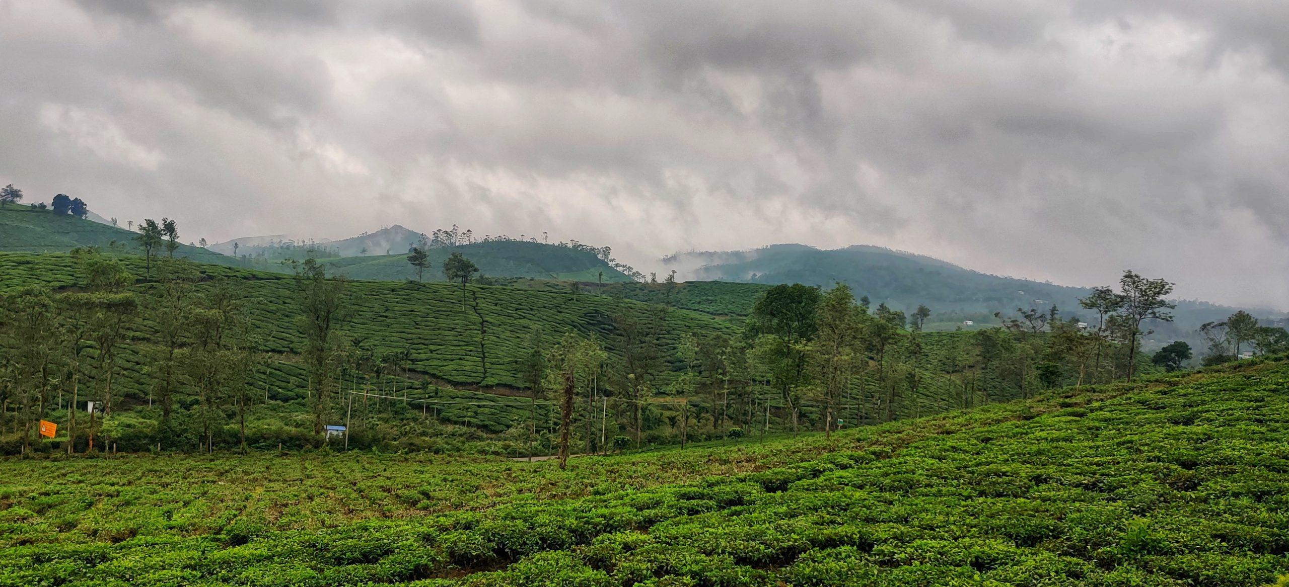 A tea estate valley