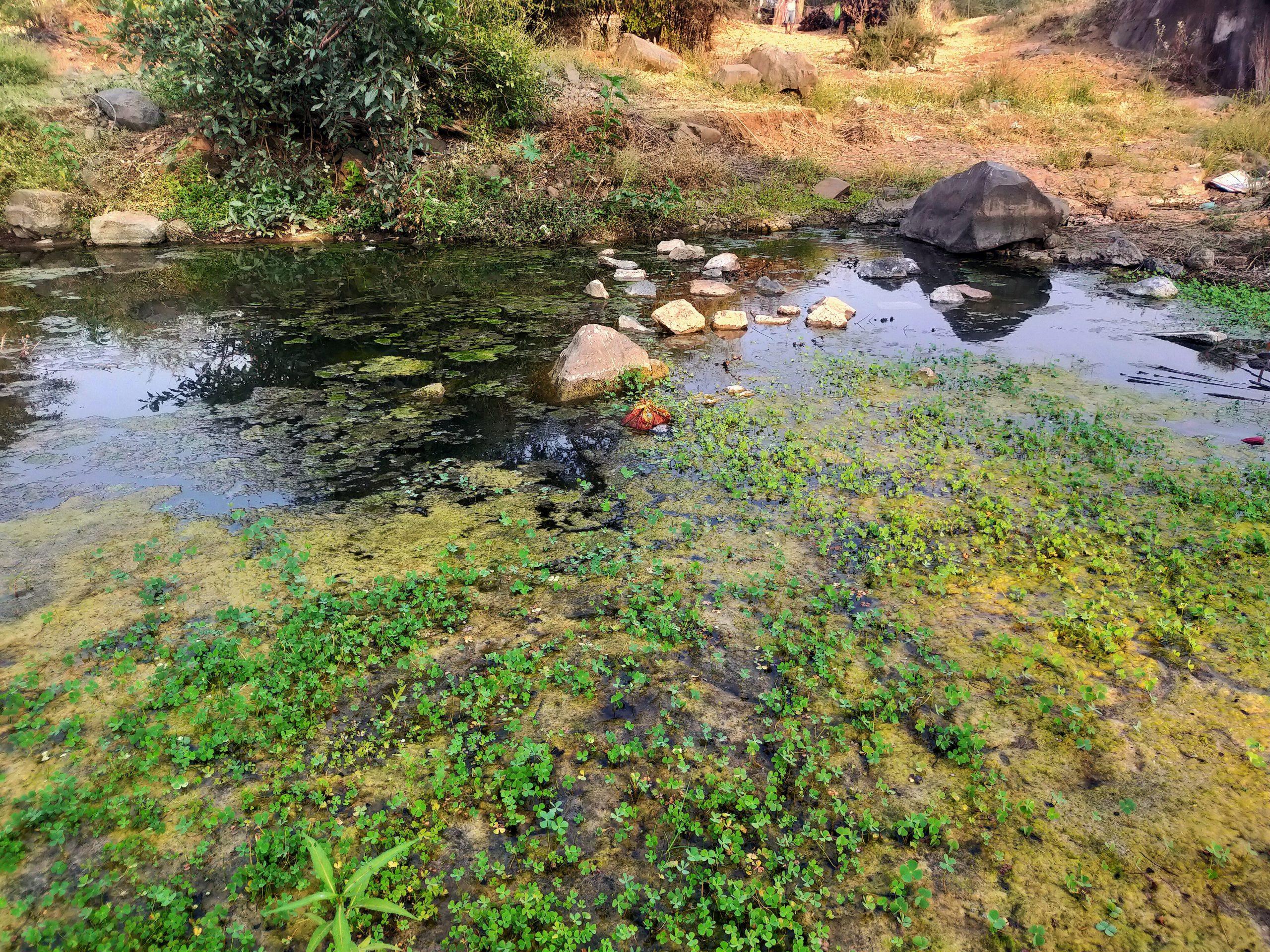 Algae in the water