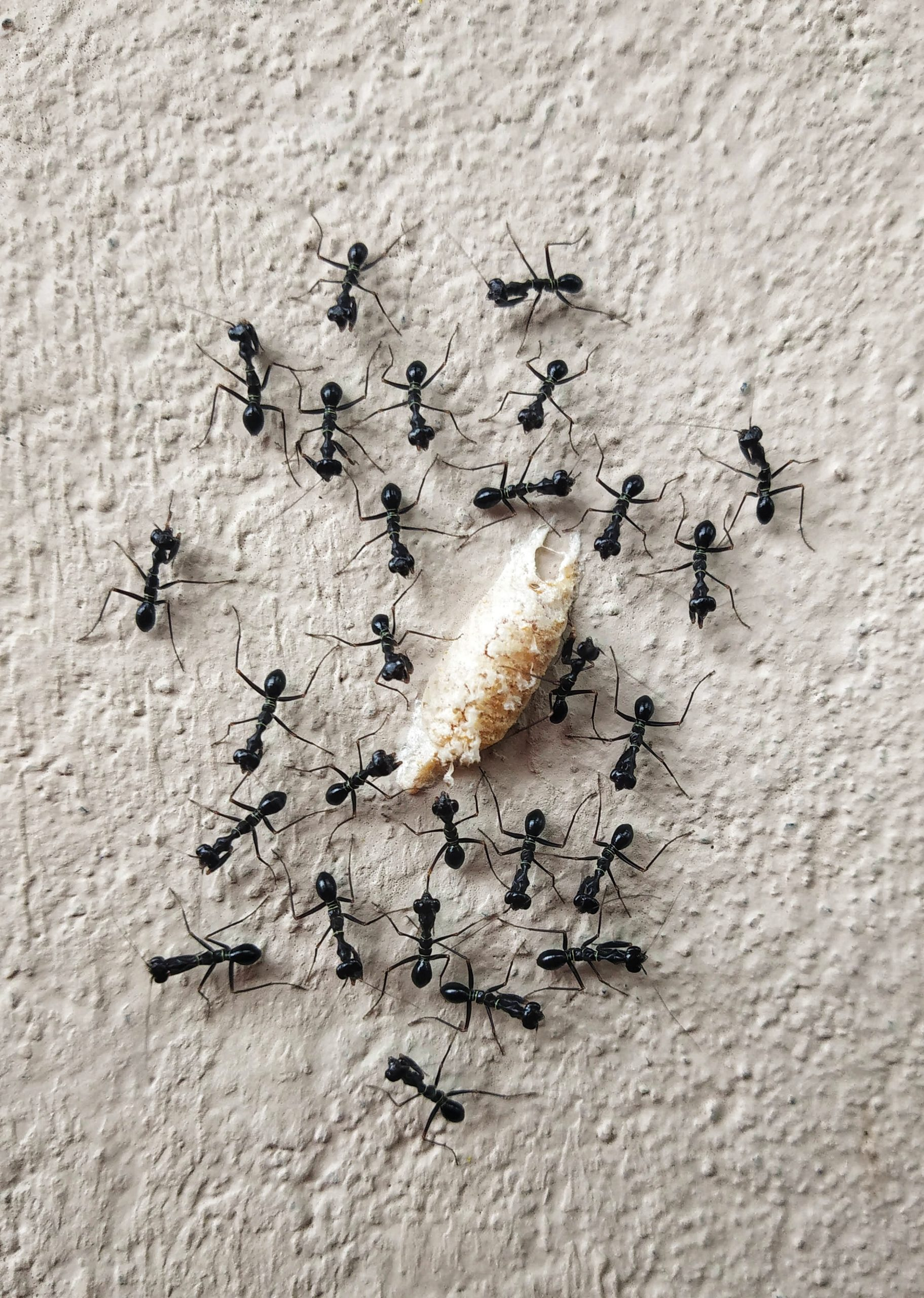 An ant colony