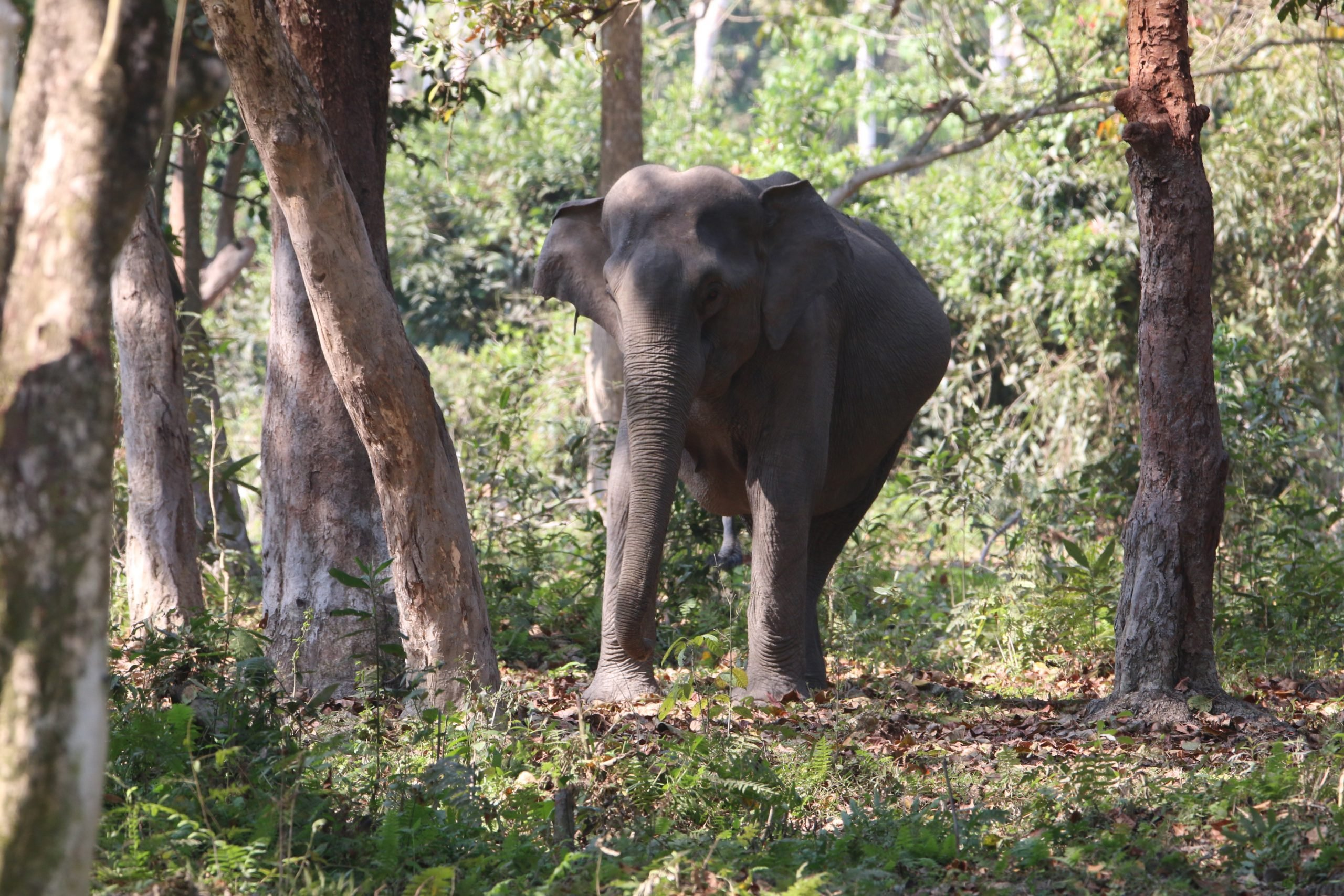 An elephant in a jungle