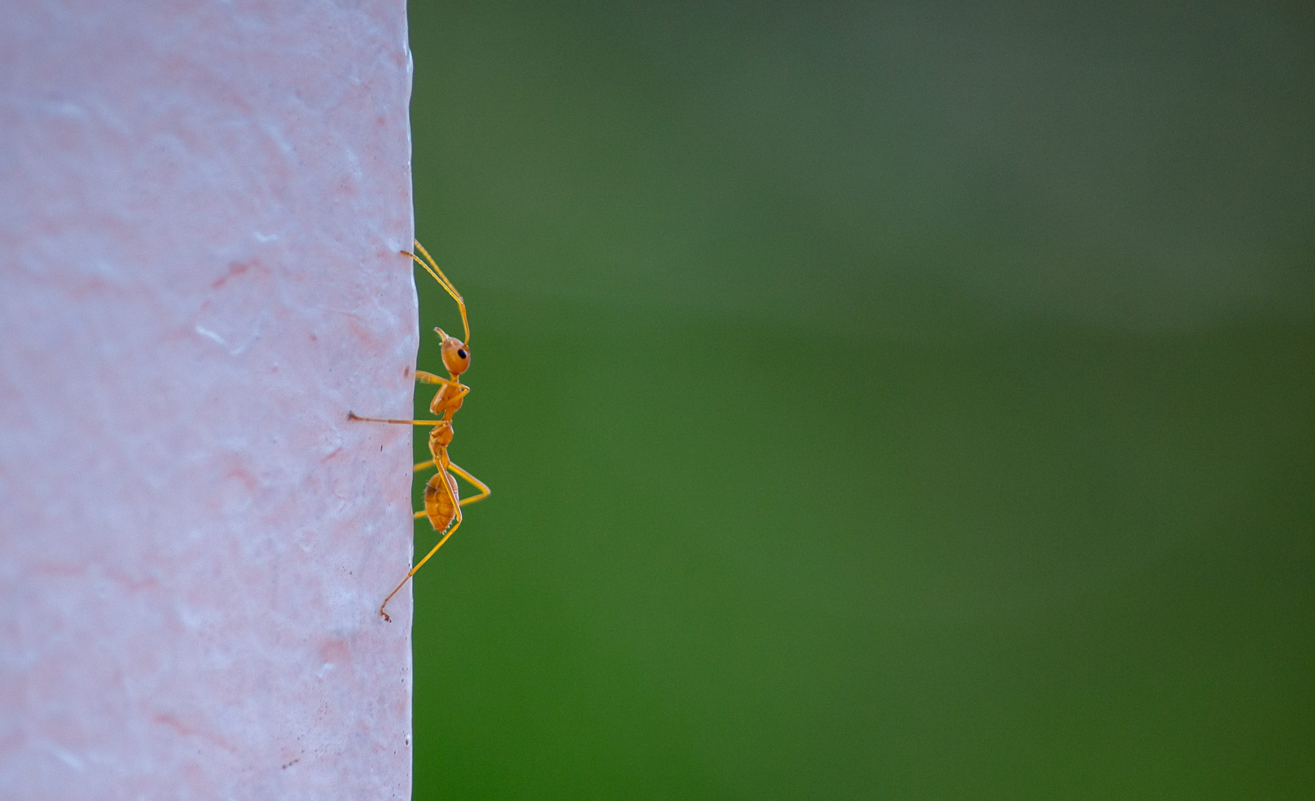 Ant on wall