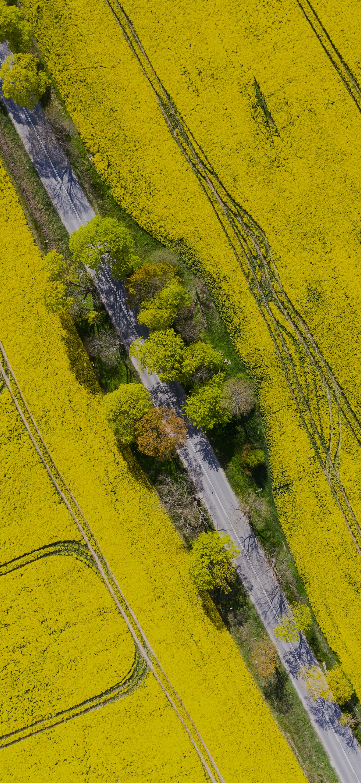 Beautiful road in the farm