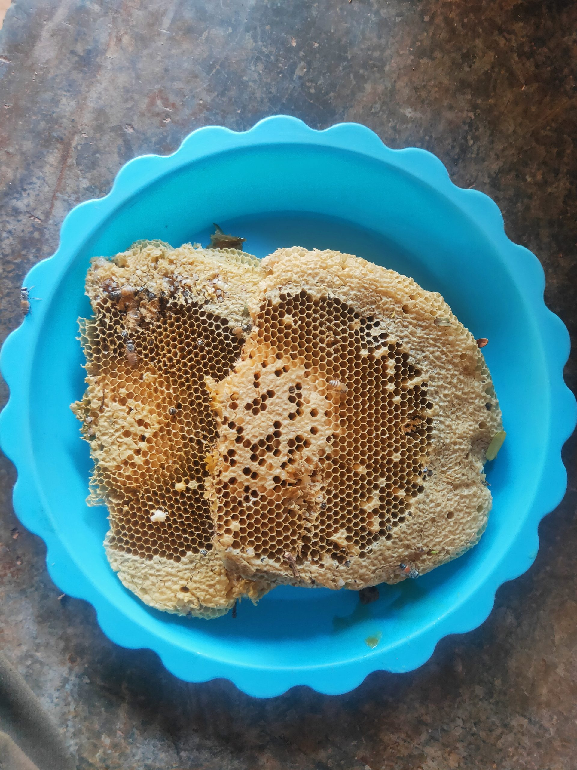 Beehive pieces in a bowl