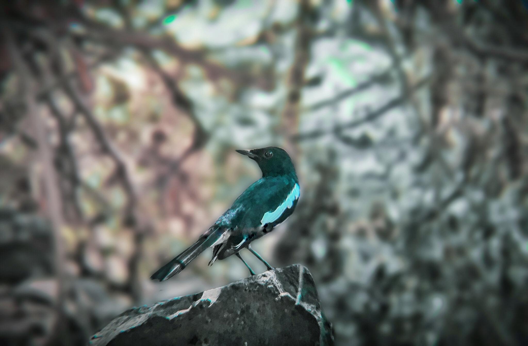 Bird sitting on the rock