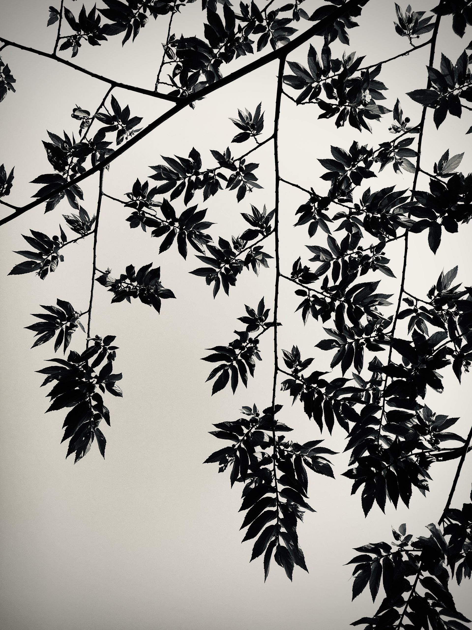 Branches and leaves of a tree