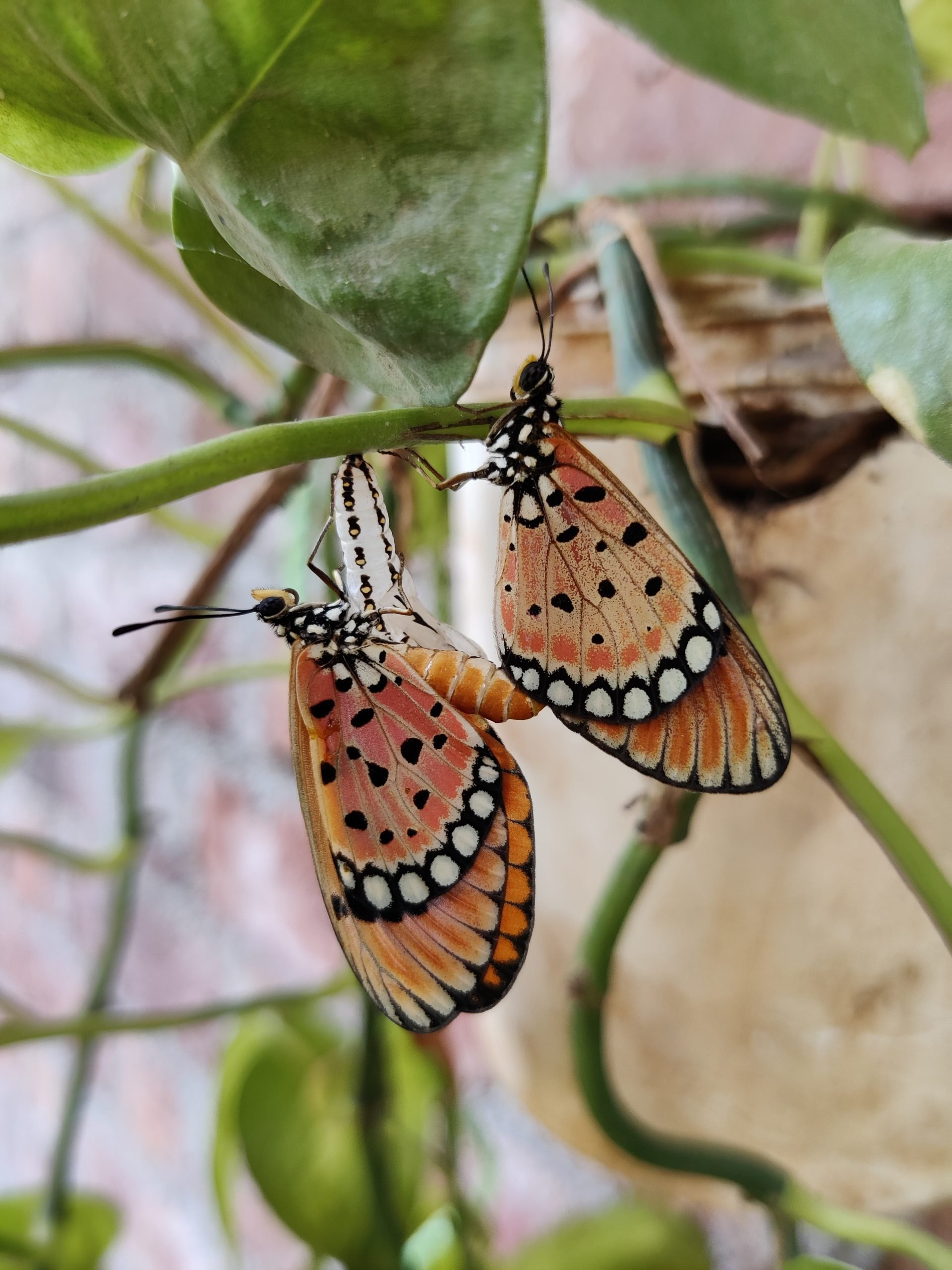 Butterflies on a plant