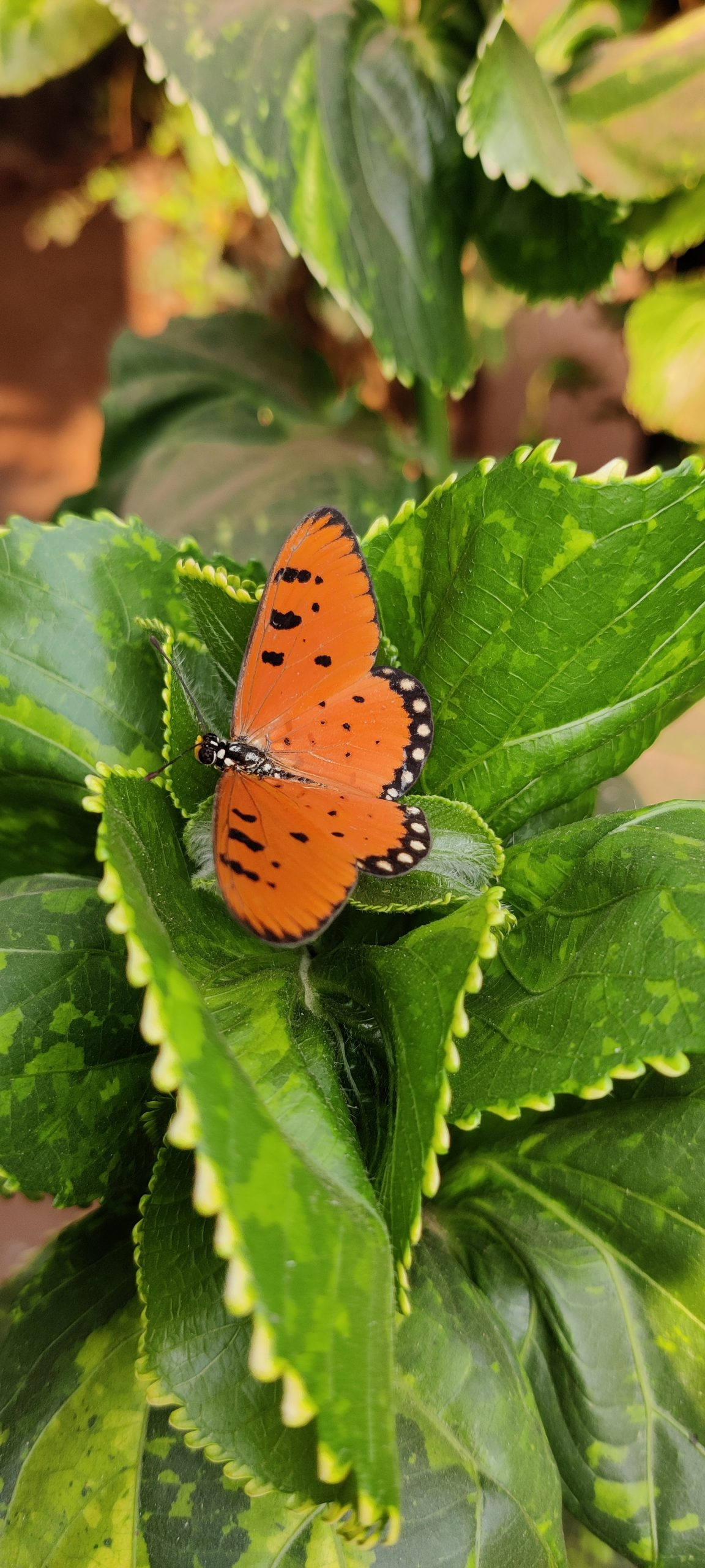 Orange textured butterfly on leaves