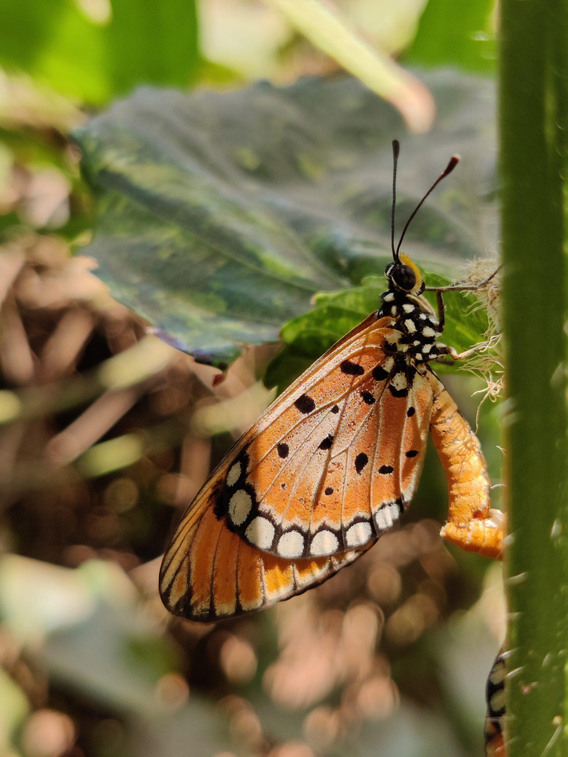 Butterfly on plant stem