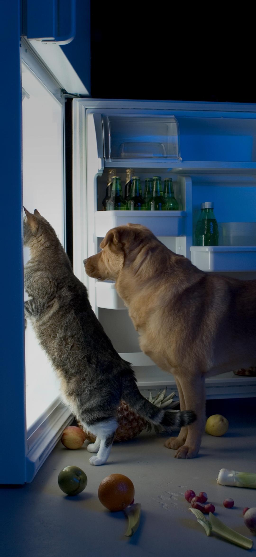 Cat and dog standing near the Fridge