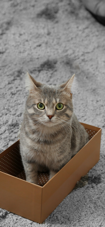 Cat sitting in box