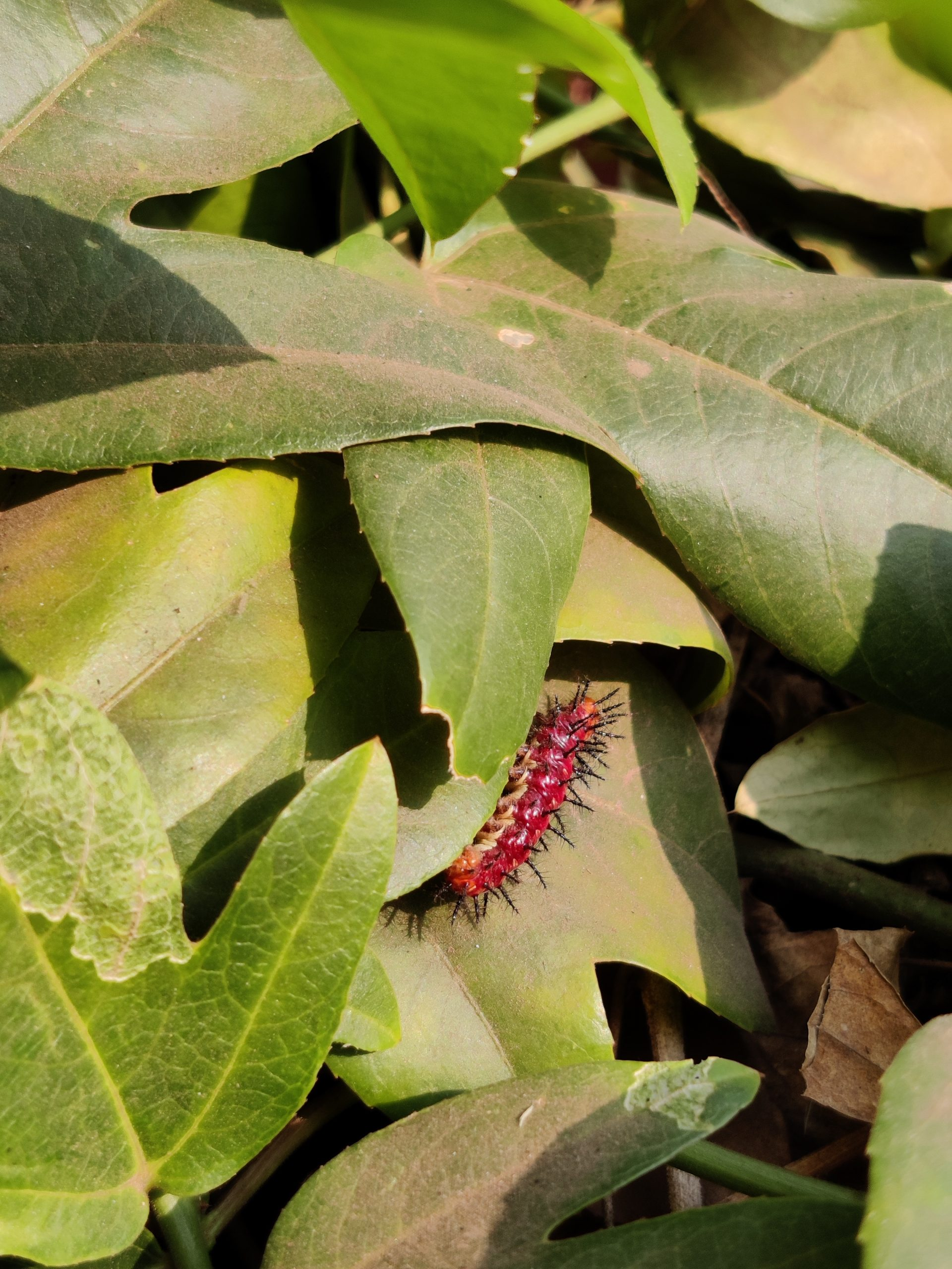 Caterpillar in leaves