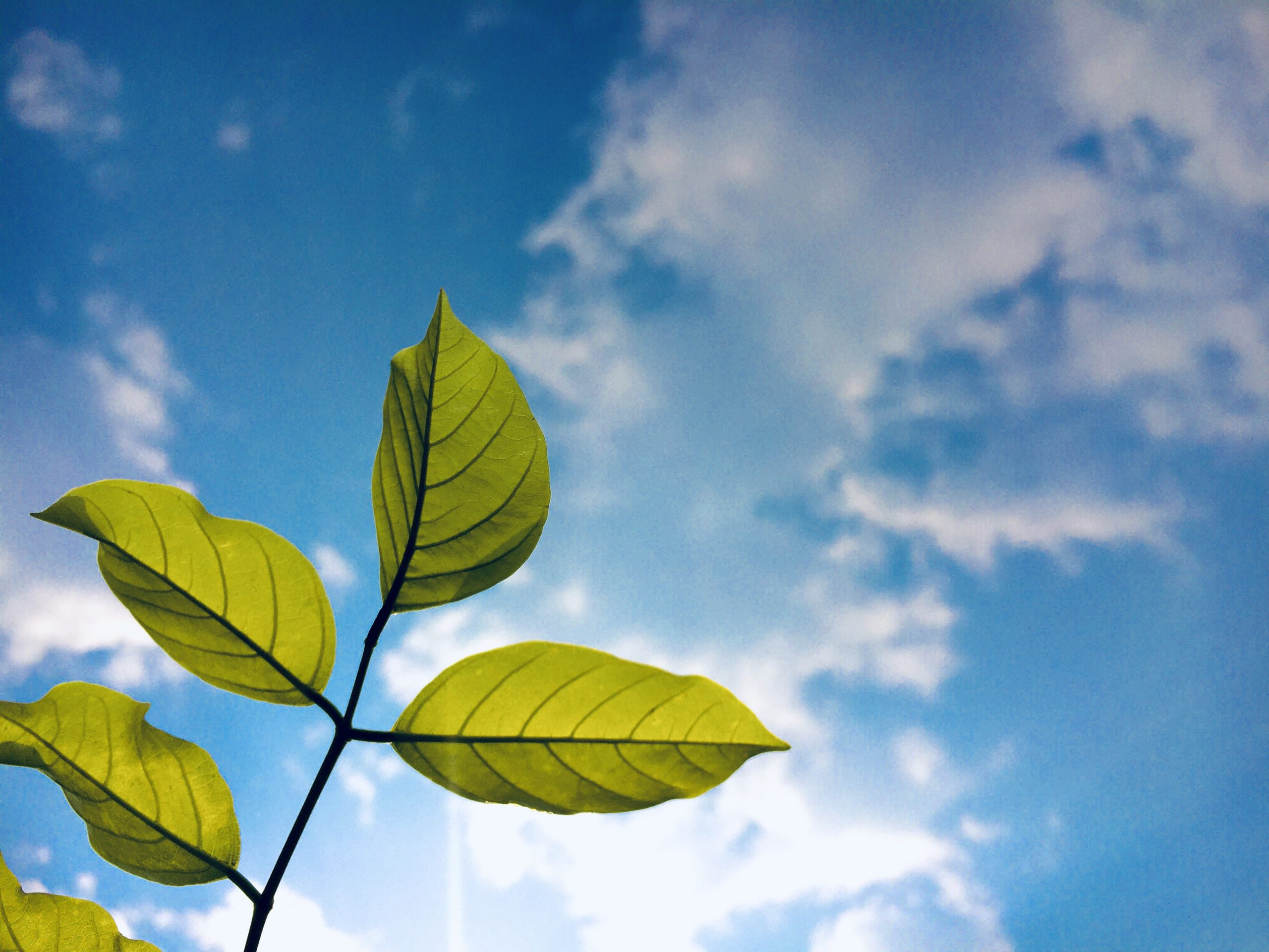 Clouds and a plant leaves