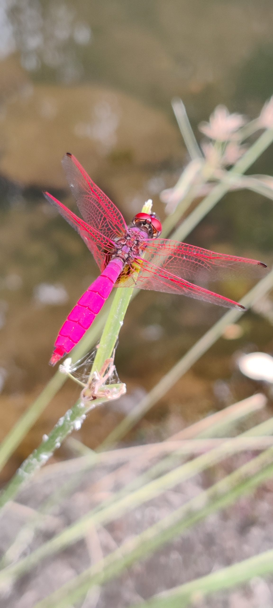 Colorful dragonfly on the plant stem