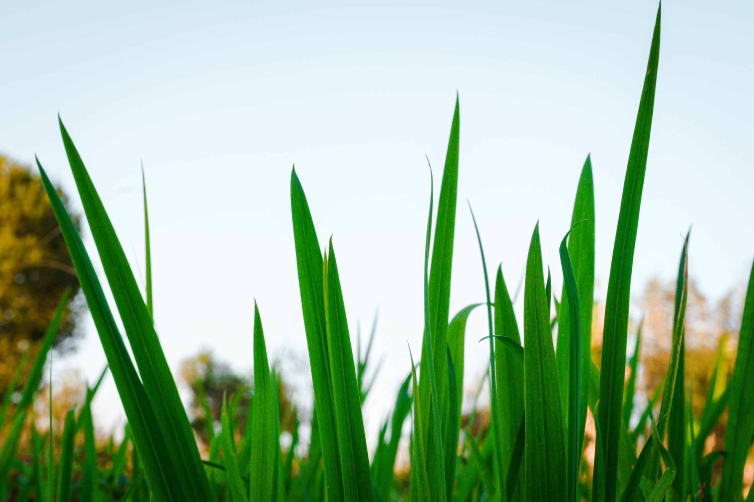 Close-up snapshot of green grass