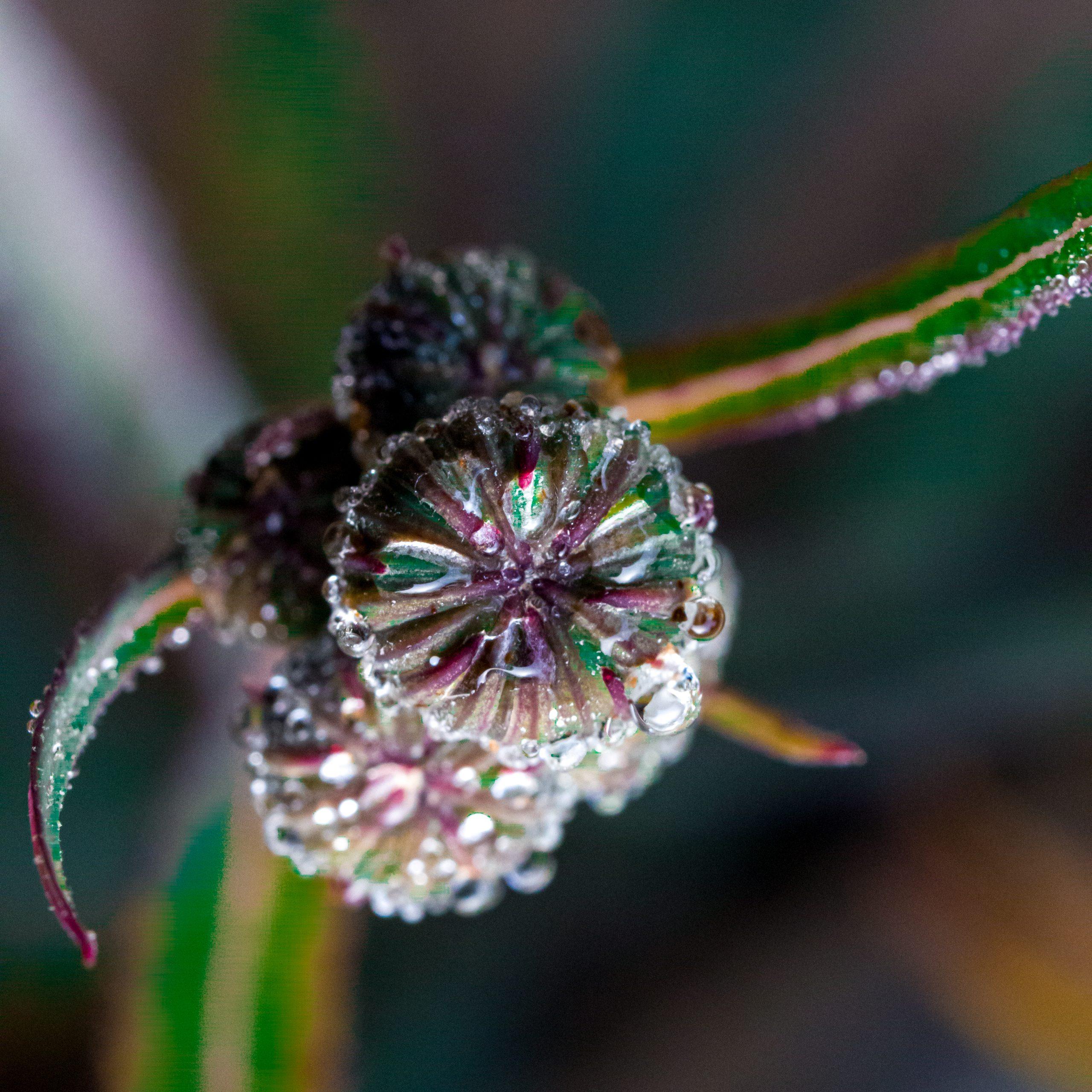 Dew drops on flowers