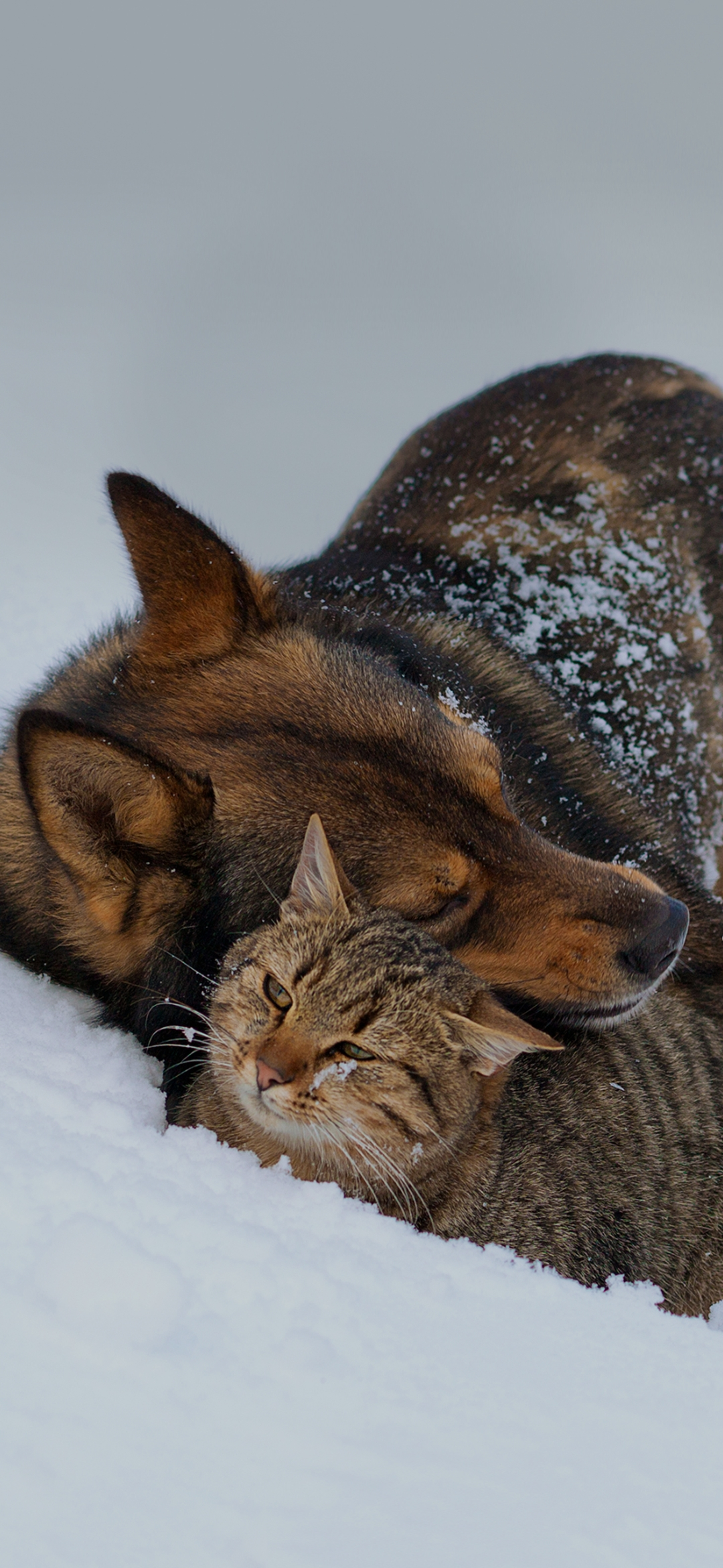A dog and cat together