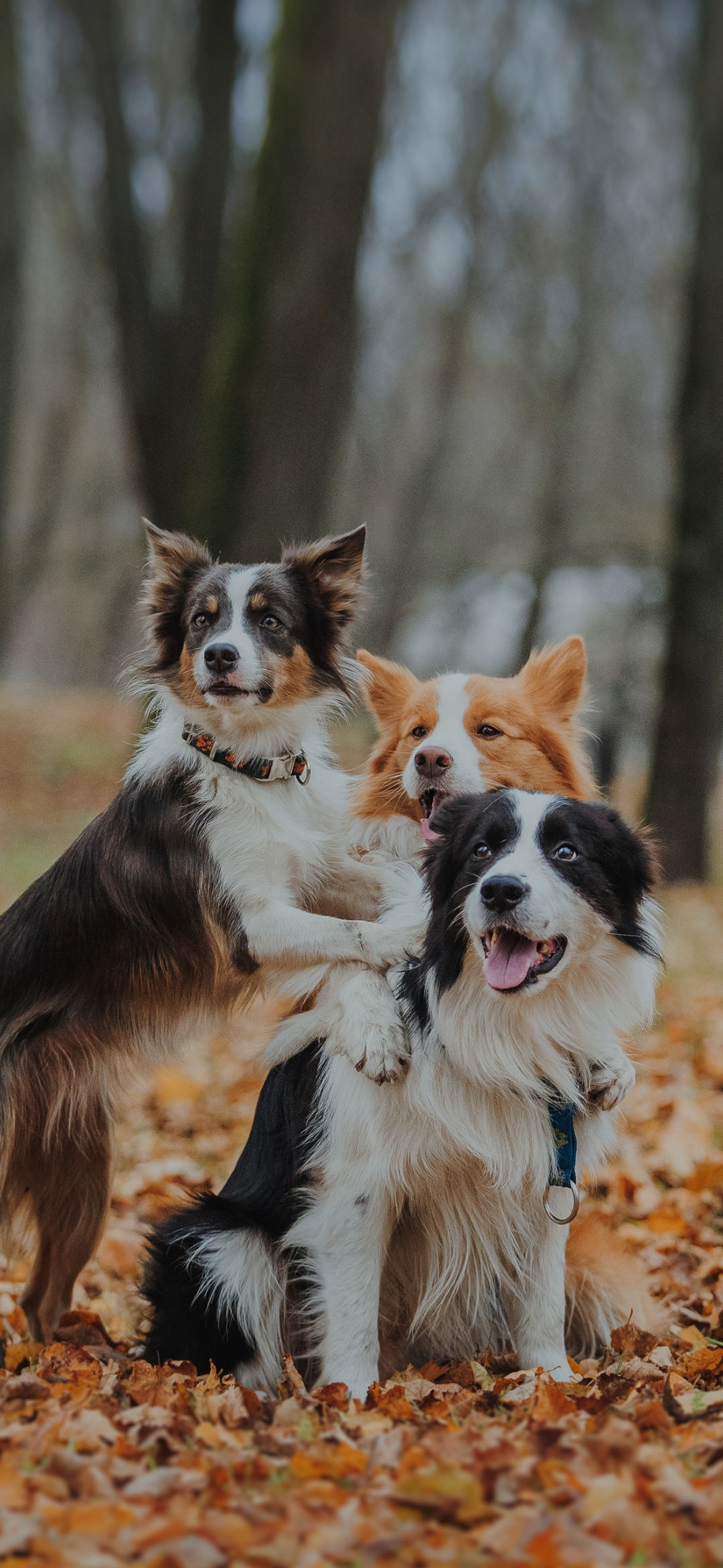 A pack of pet dogs