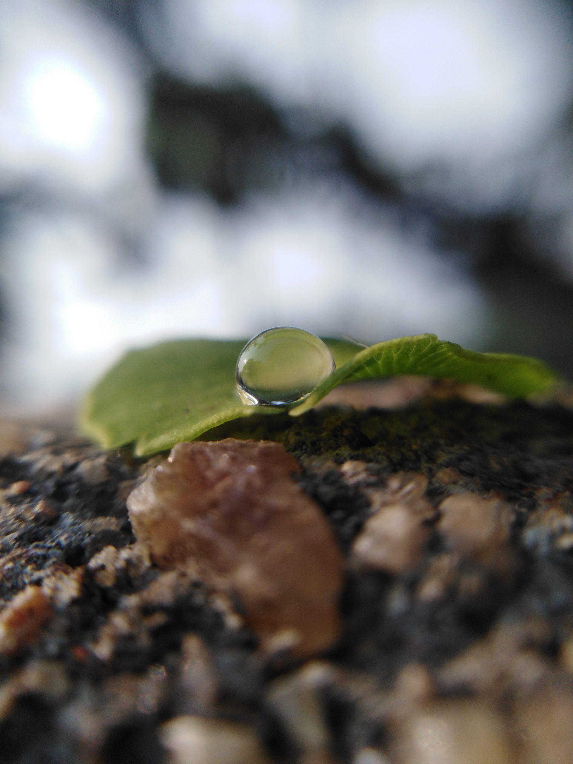 A drop on a leaf