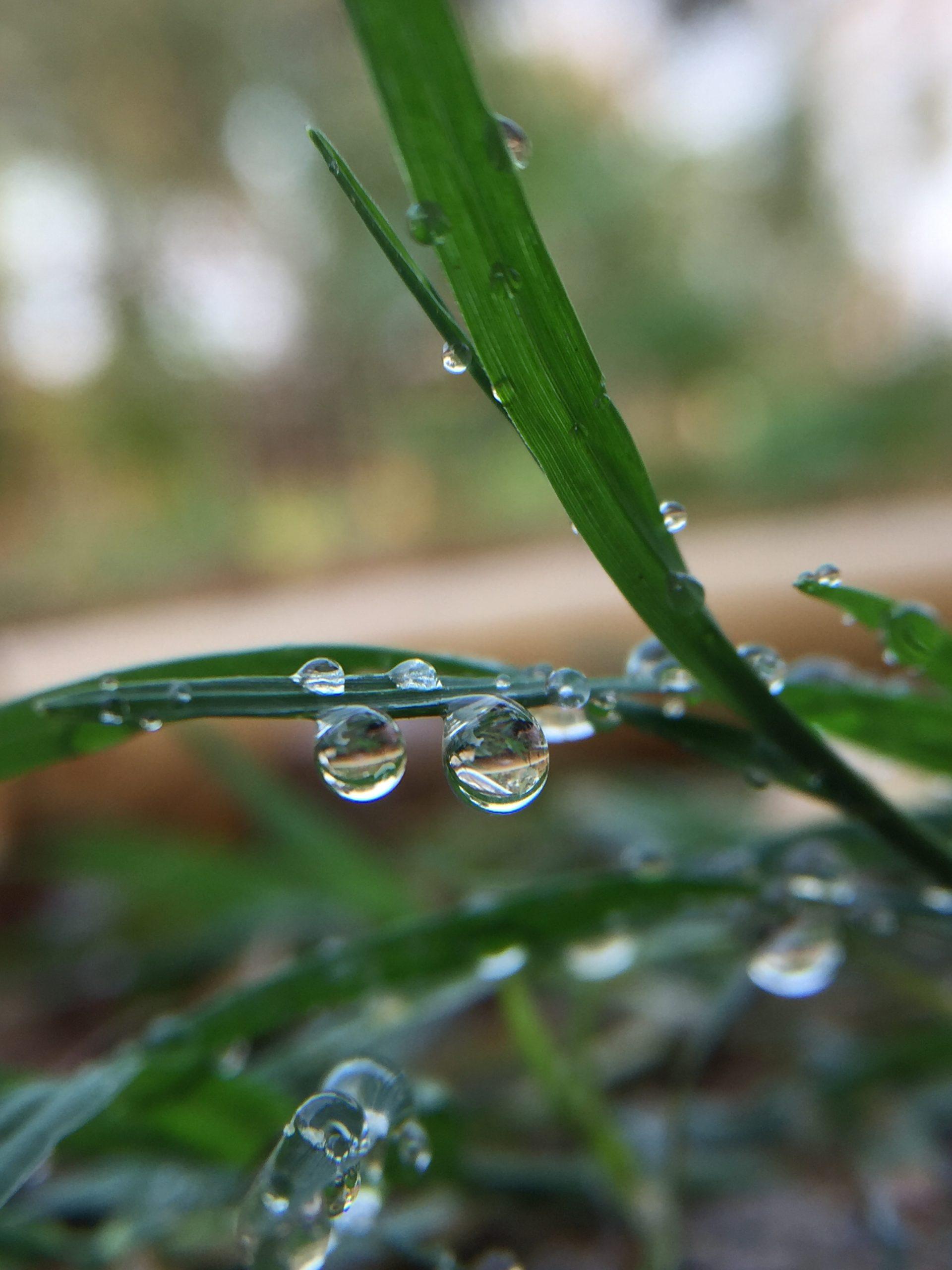 Drops on plant leaf