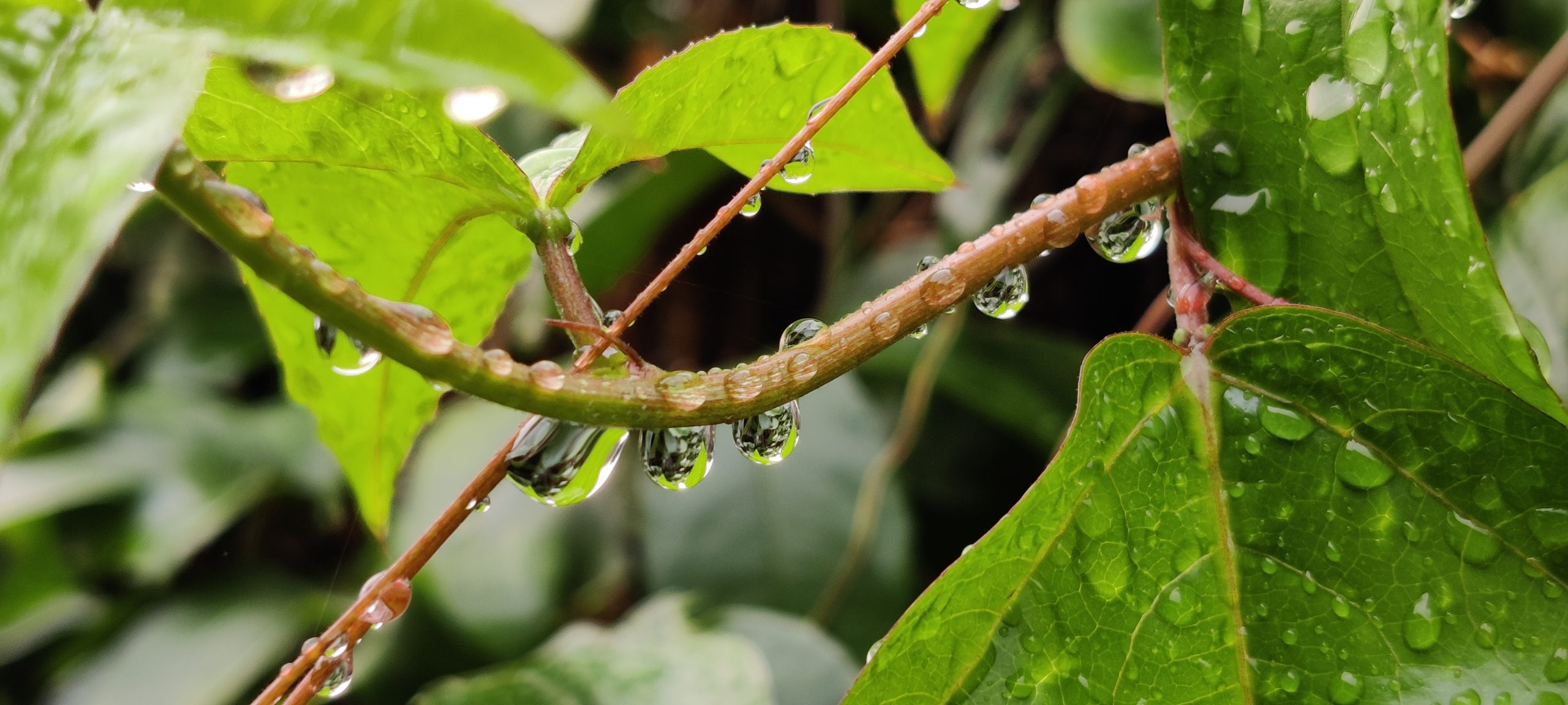 Drops on plant stem